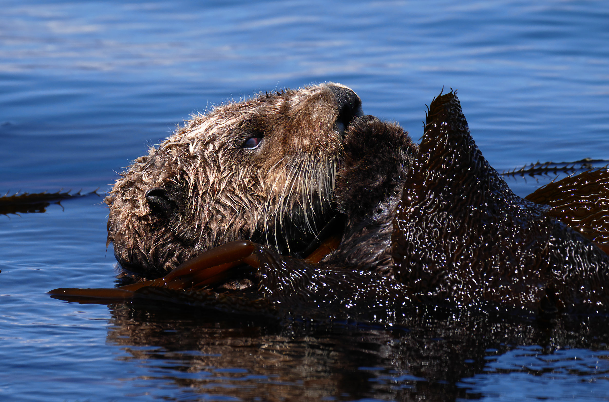 Sea otter photo tours