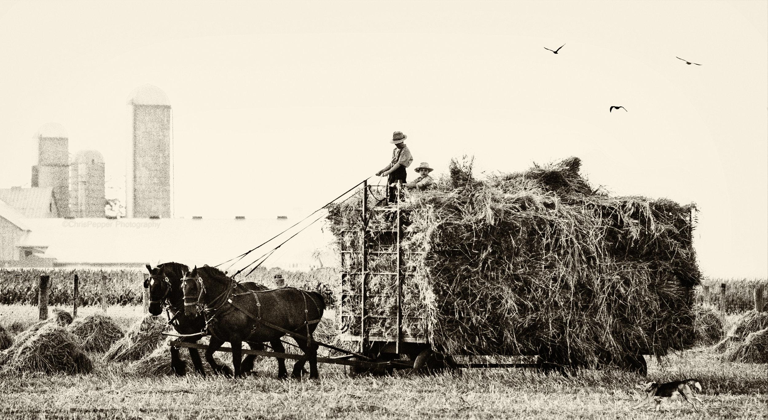 Boys on the wagon.jpg
