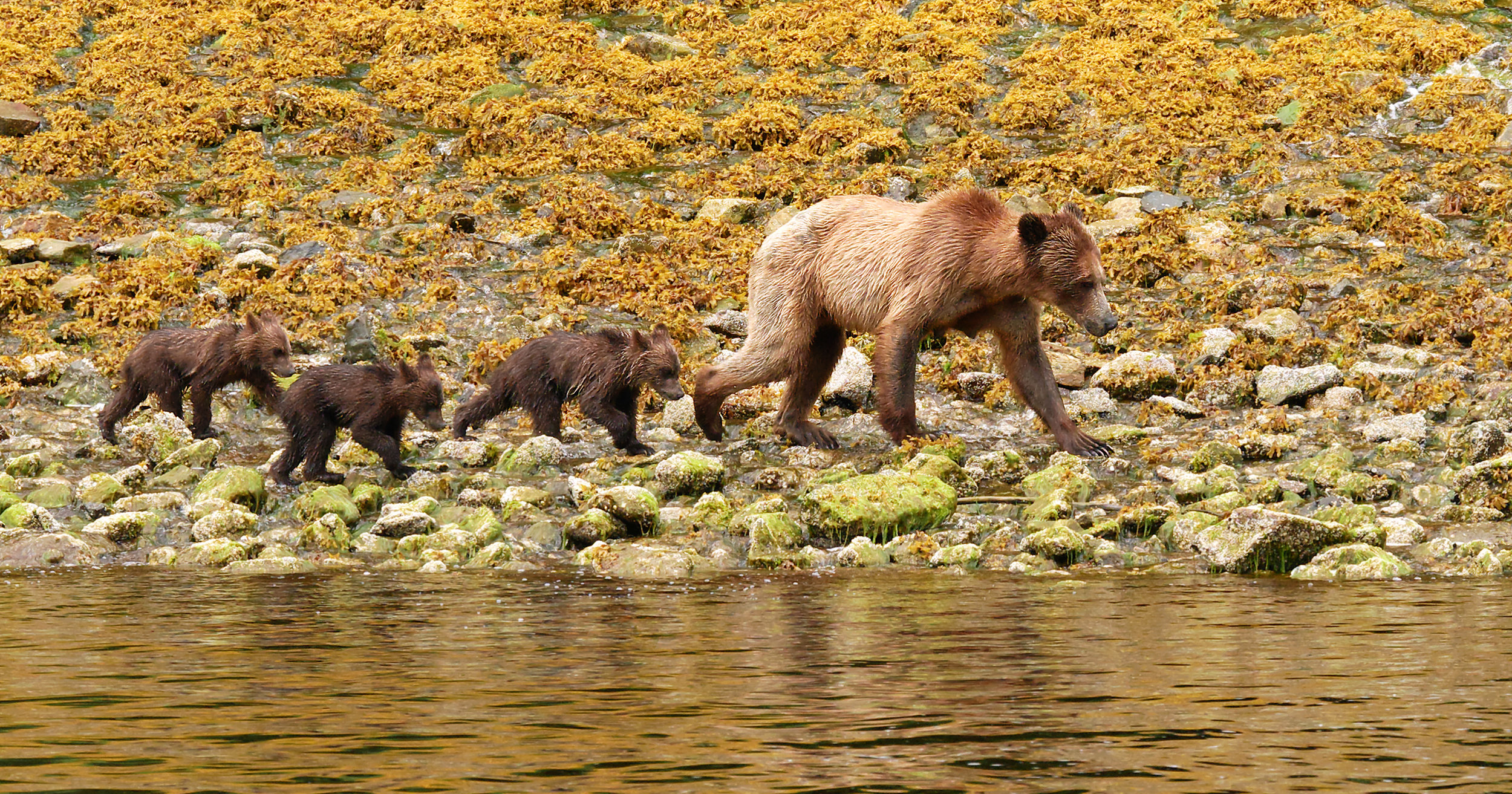 Momma and her cubs.jpg