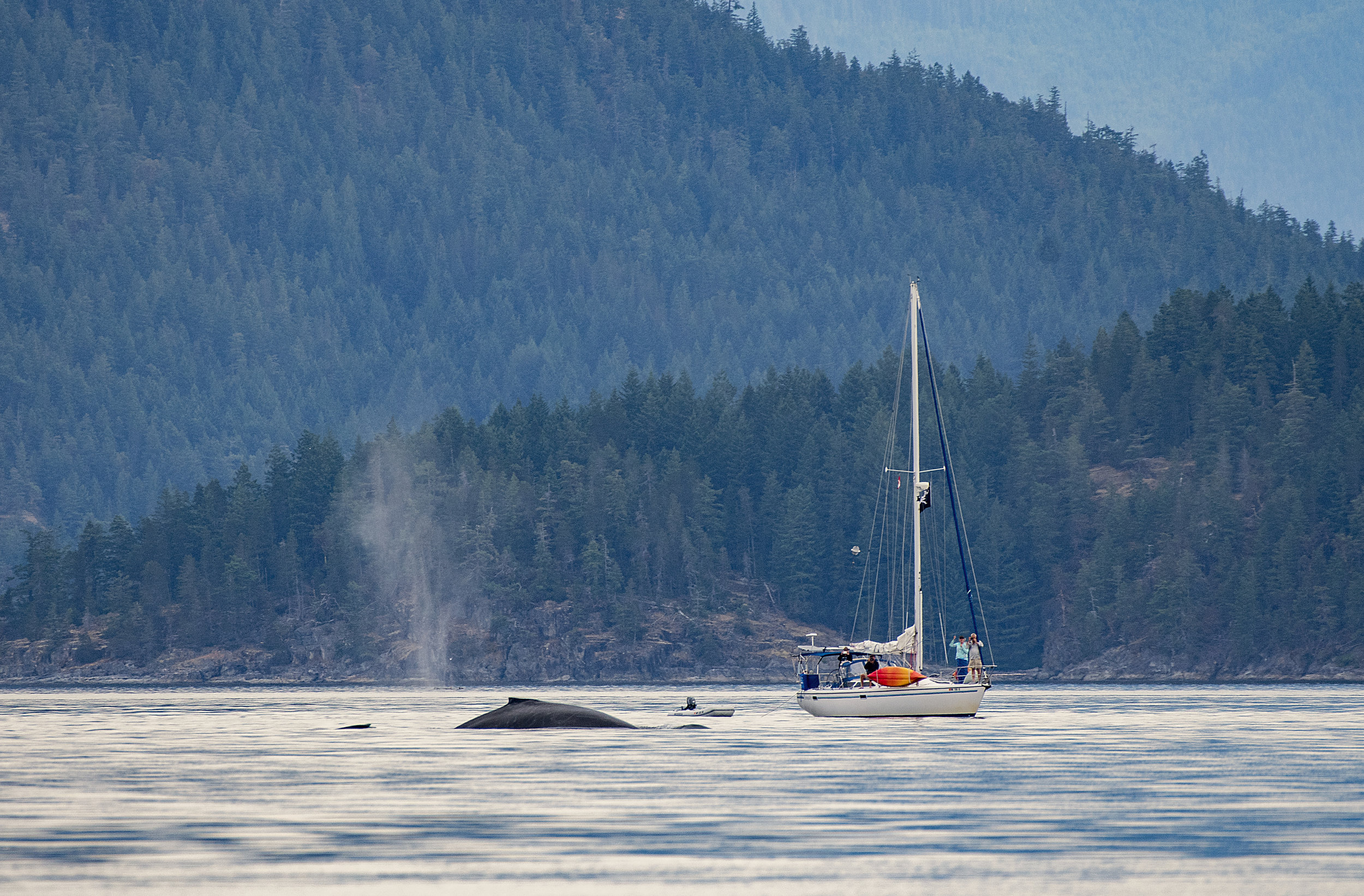 BC mountains and humpback Chris Pepper