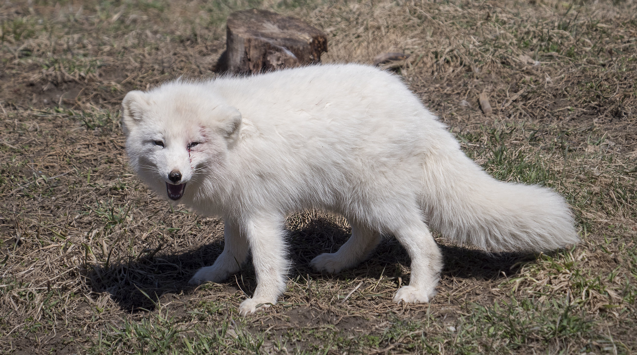 funny fox.jpg