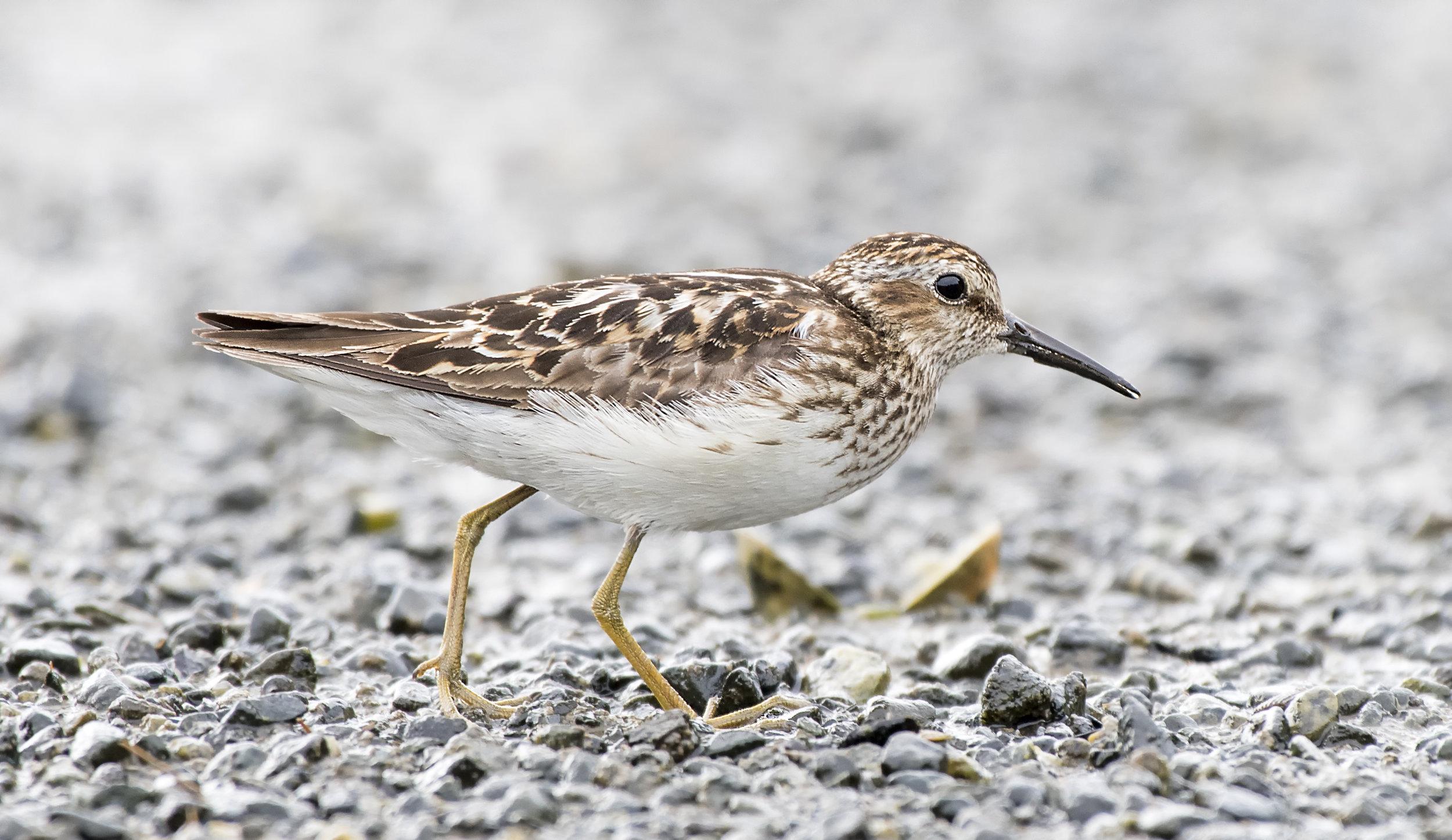 shore bird with Ivor.jpg
