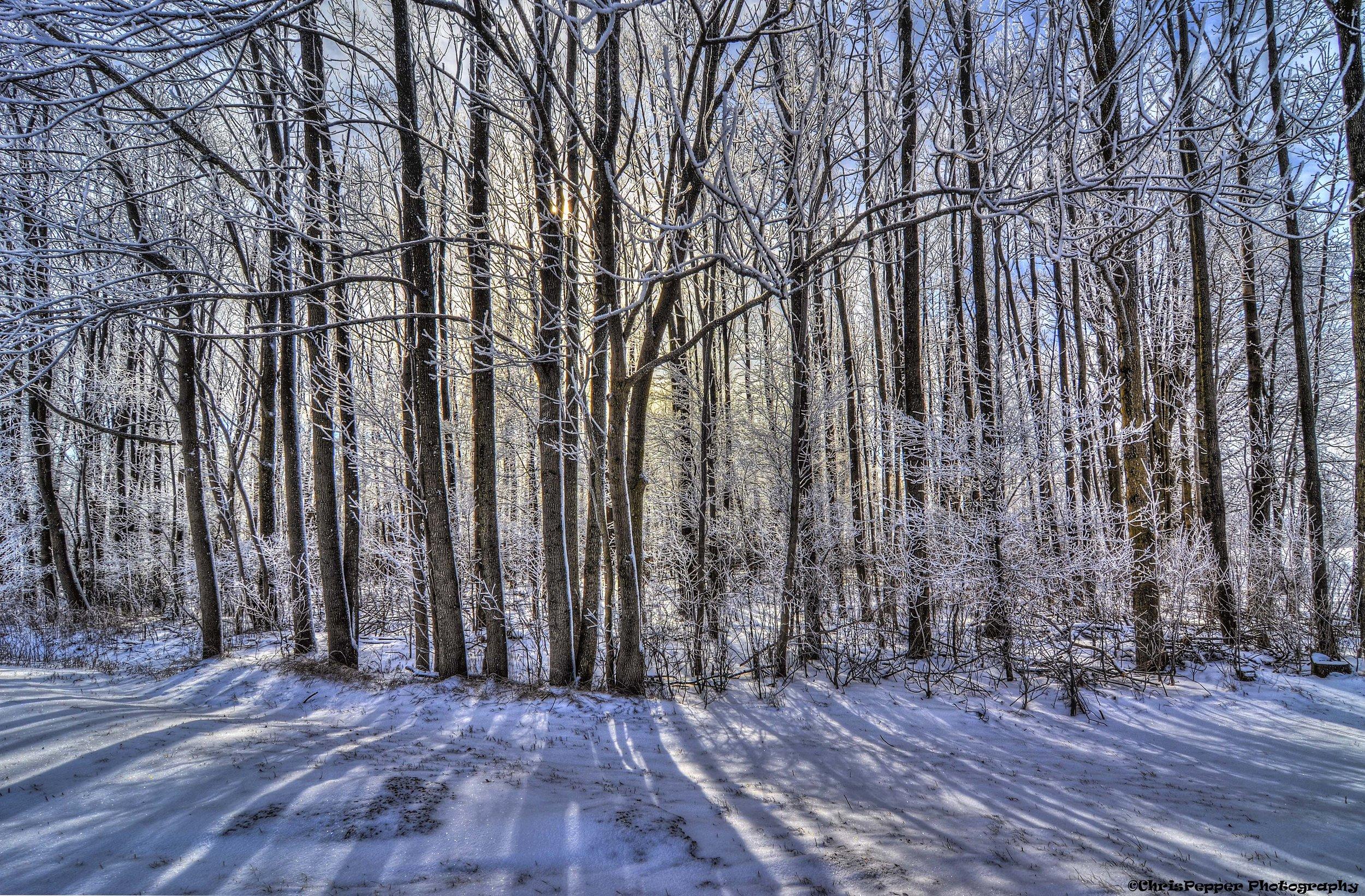 murder frost.jpg