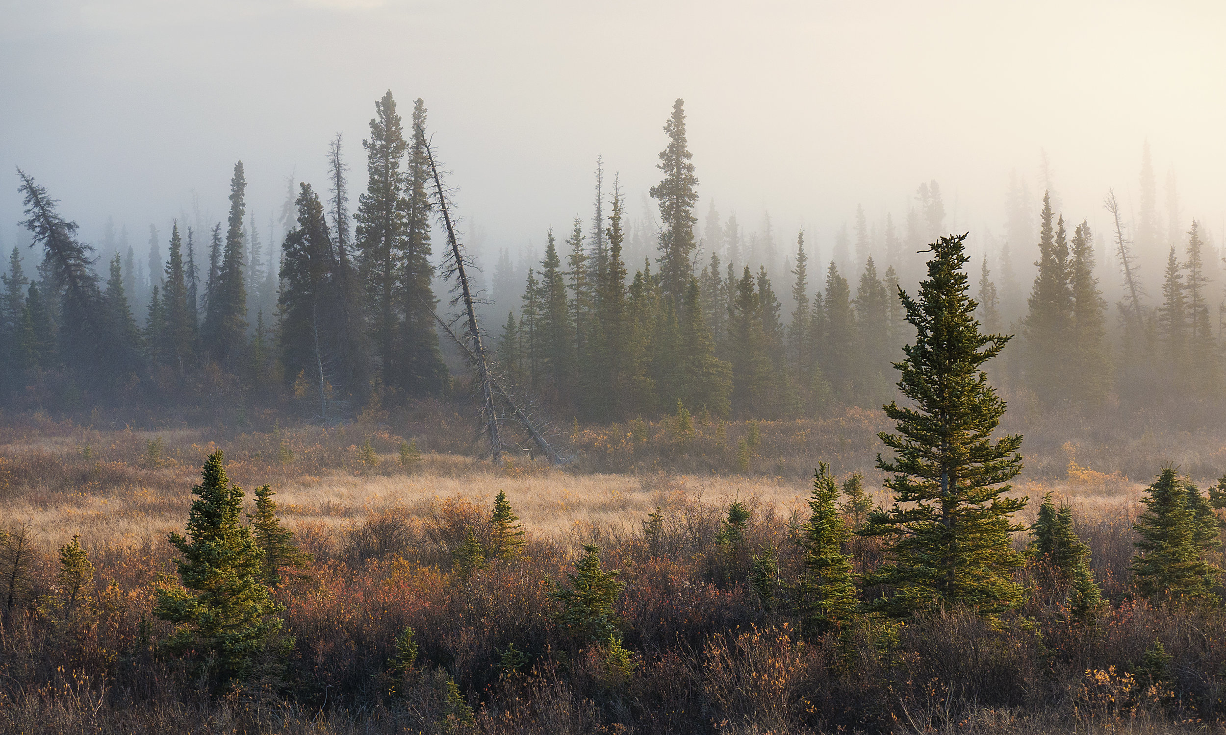 Fog in a low lying area Yukon, by Chris Pepper
