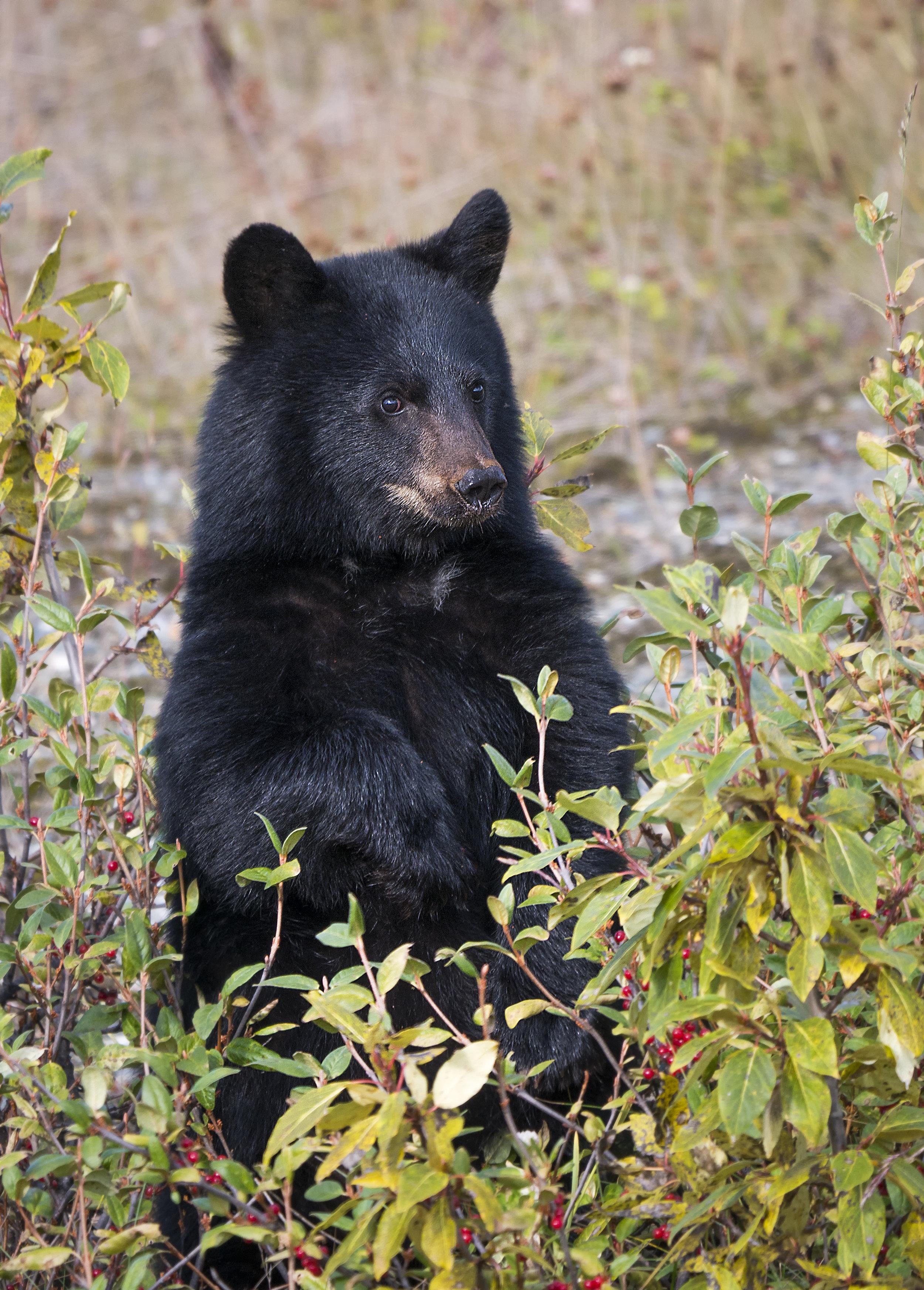 Lumix cub standing up G85.jpg