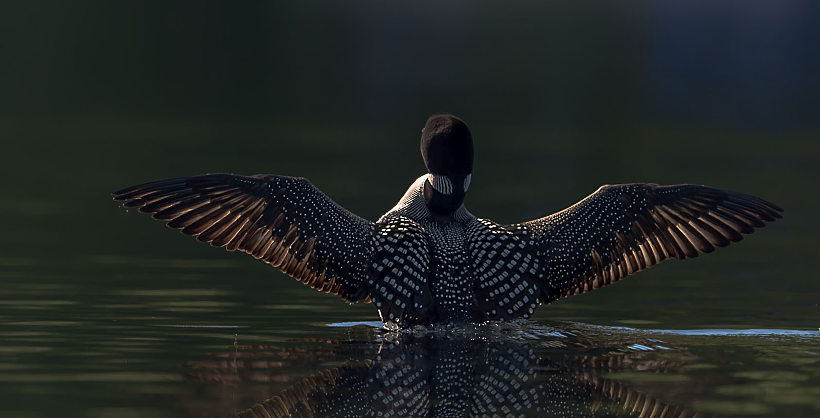 Wing spread in to the sun by Kevin K Pepper