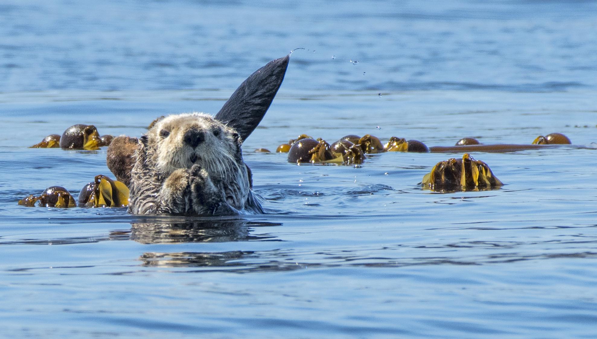 qurious otter .jpg