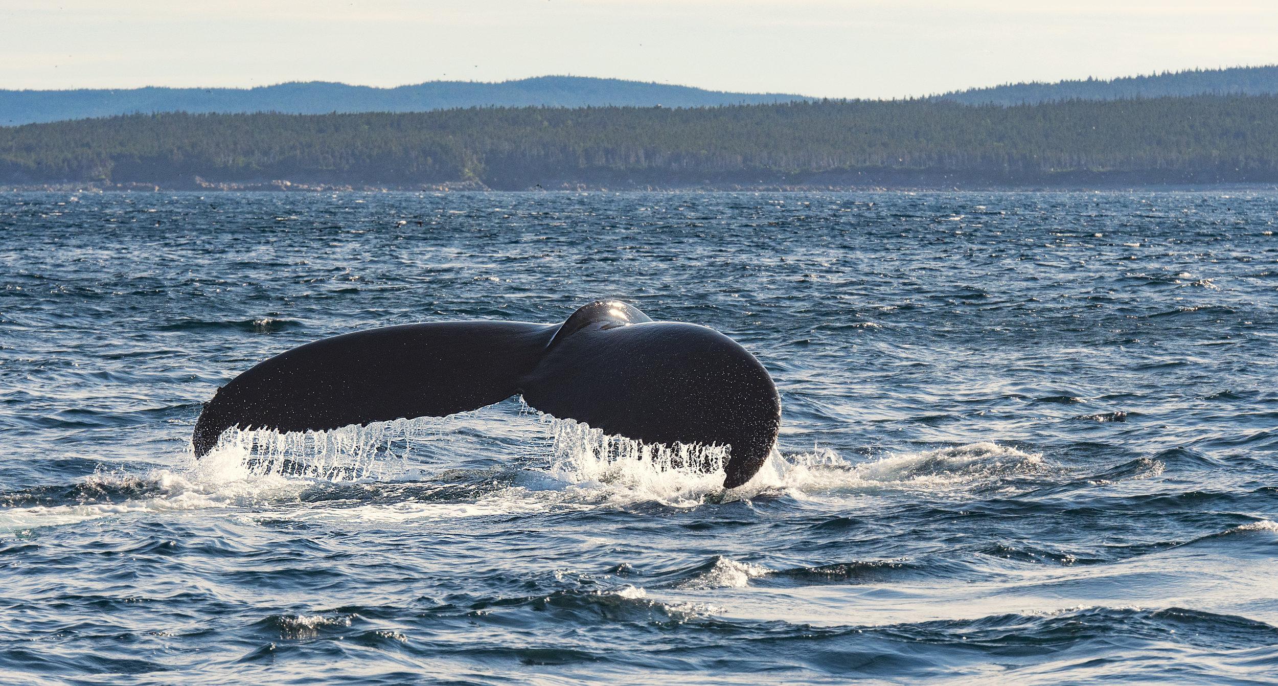 Panasonic whale tail GH5.jpg