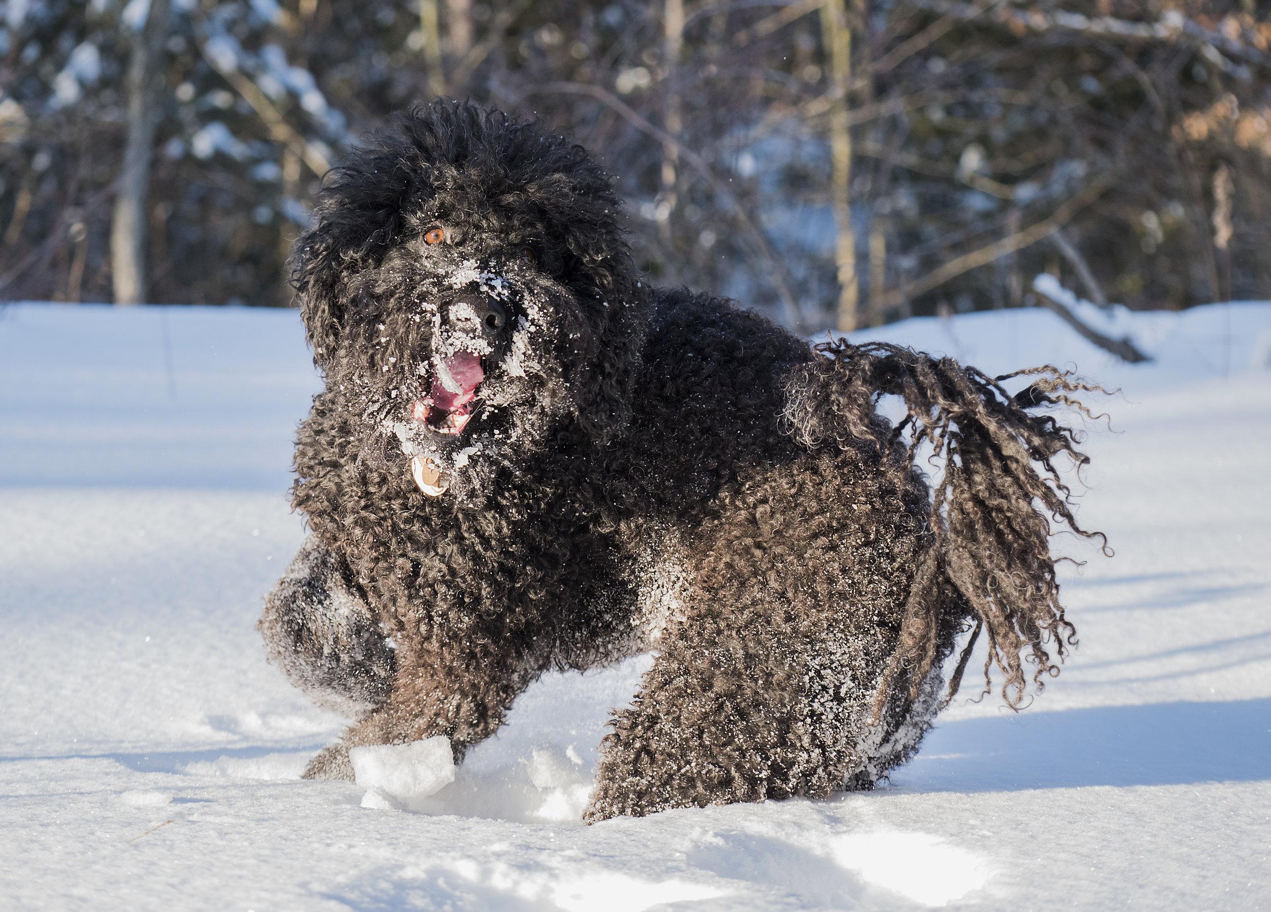 runing in the snow.jpg