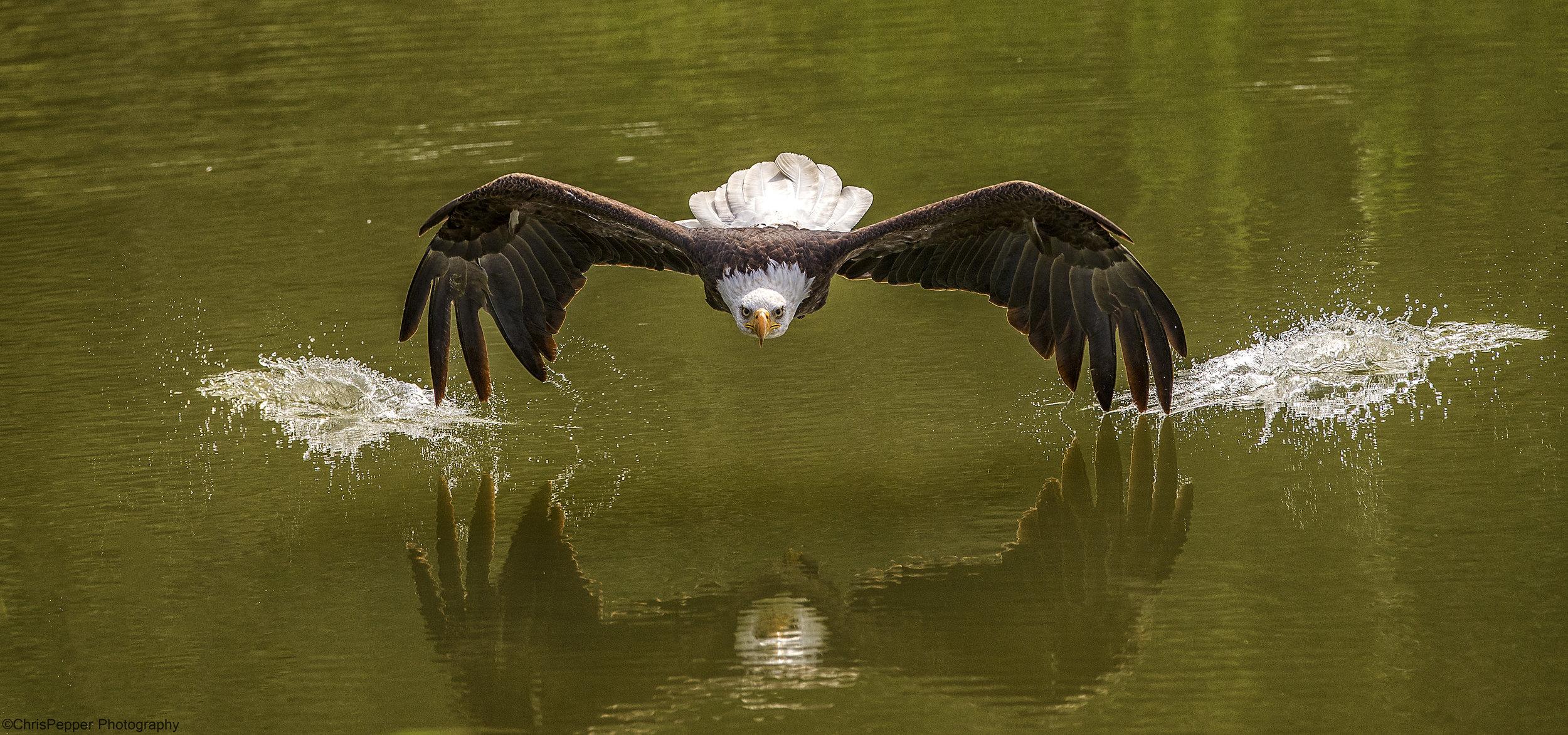 Baldy over the pond.jpg