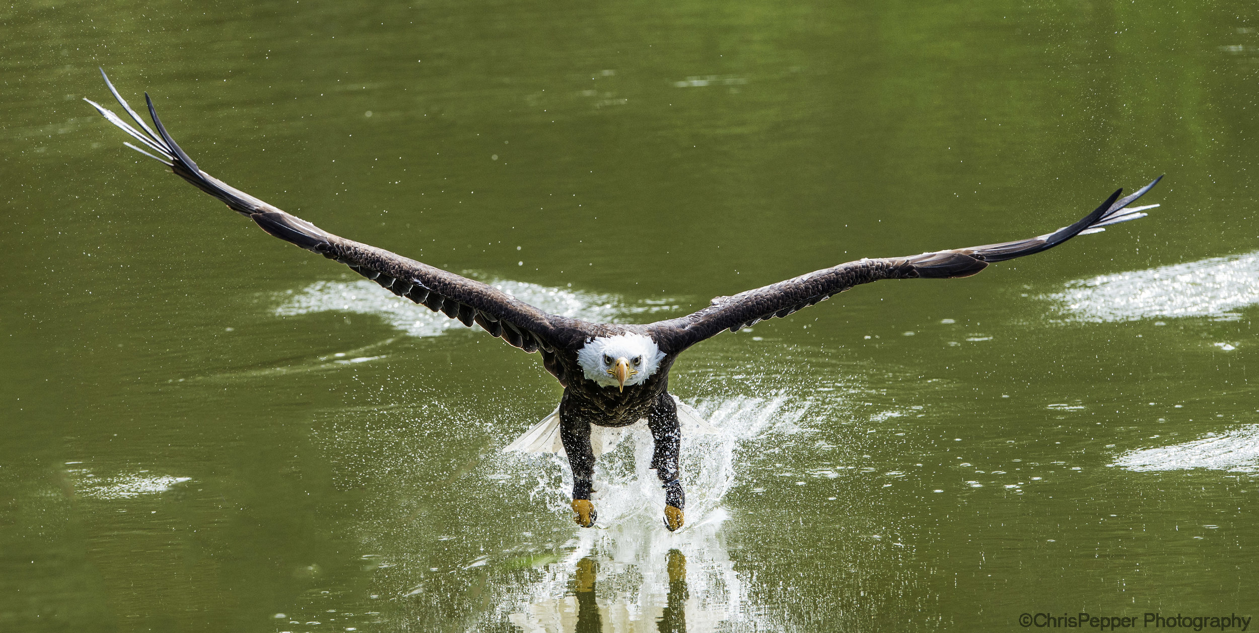 talons in the water.jpg