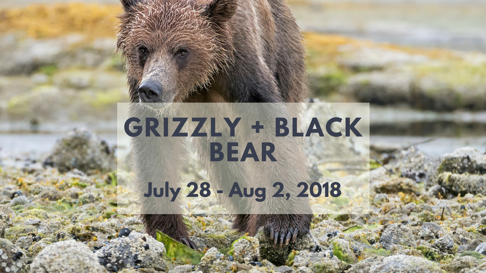 Grizzly & Black Bear Photo Tour - North of 49 Photography
