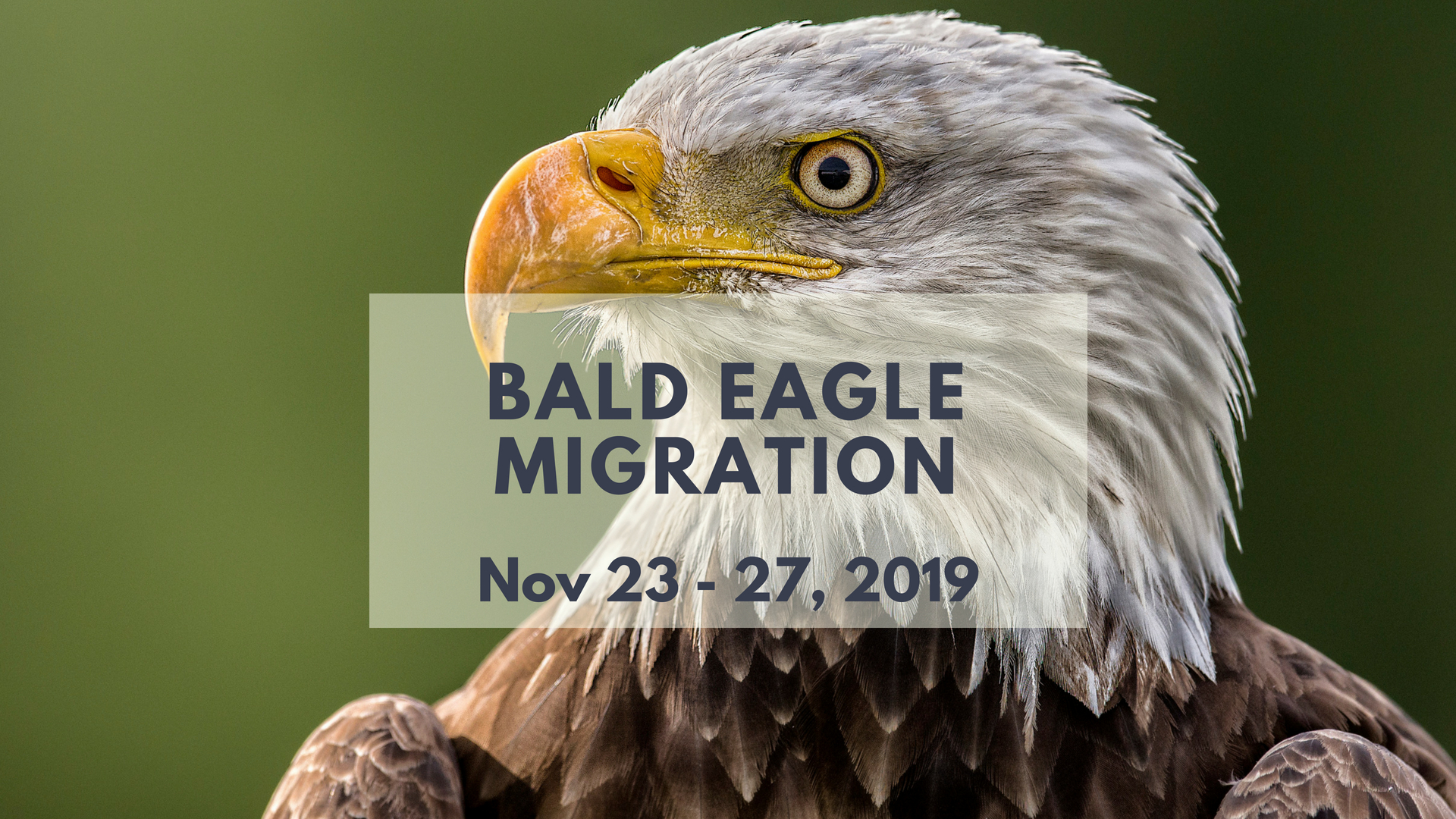 BC Bald Eagle Migration Photo Tour - North of 49 Photography