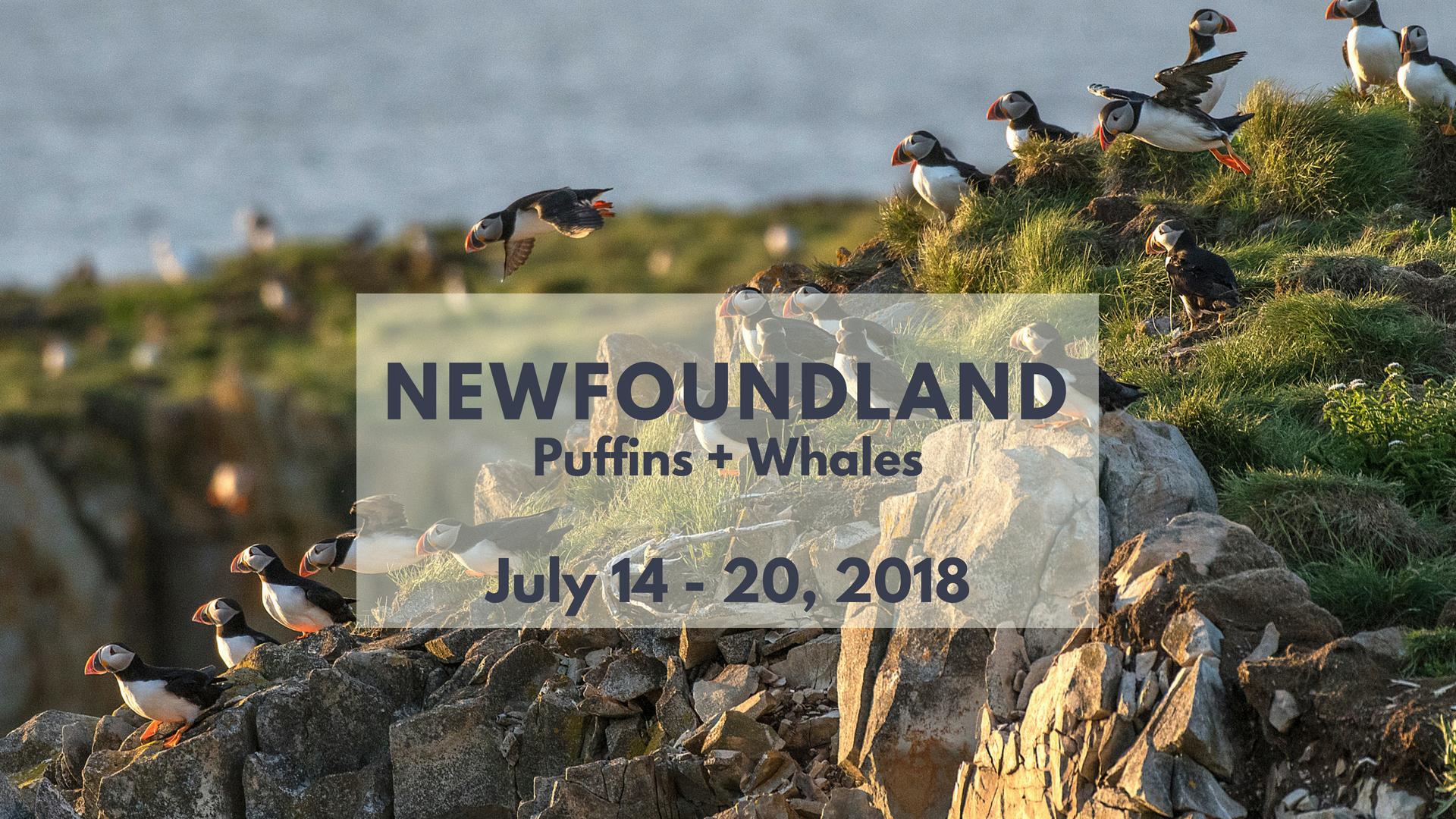 Newfoundland Photo Tour - North of 49 Photography