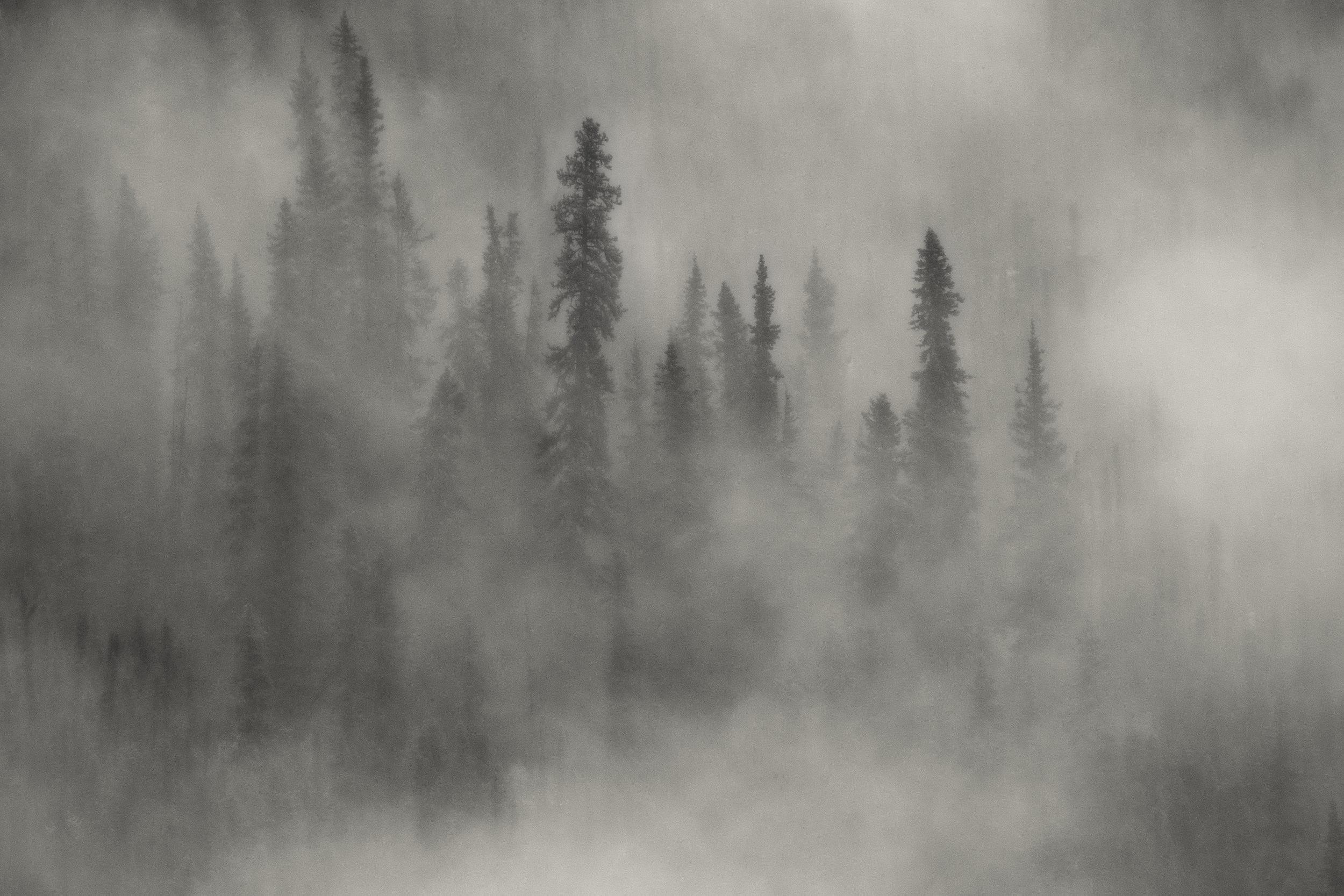 Foggy am Yukon.jpg