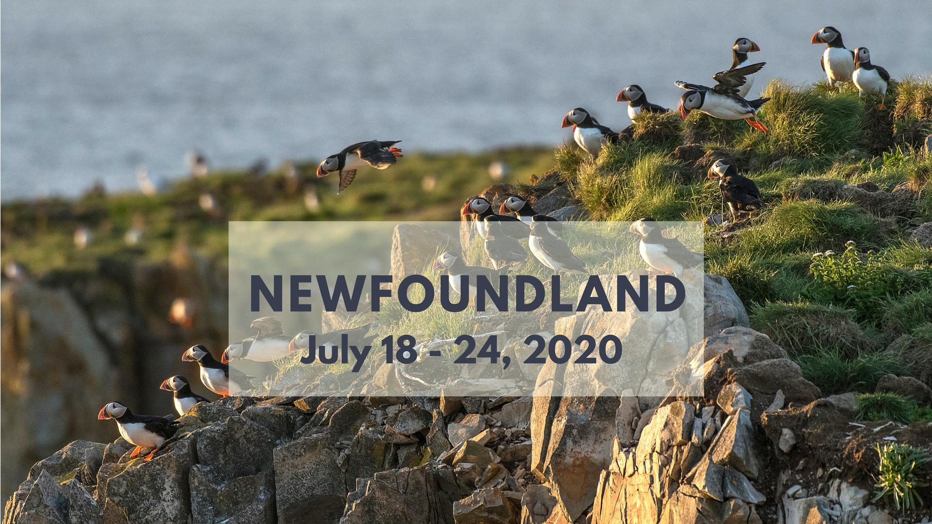 Newfoundland Photography Workshop 2020