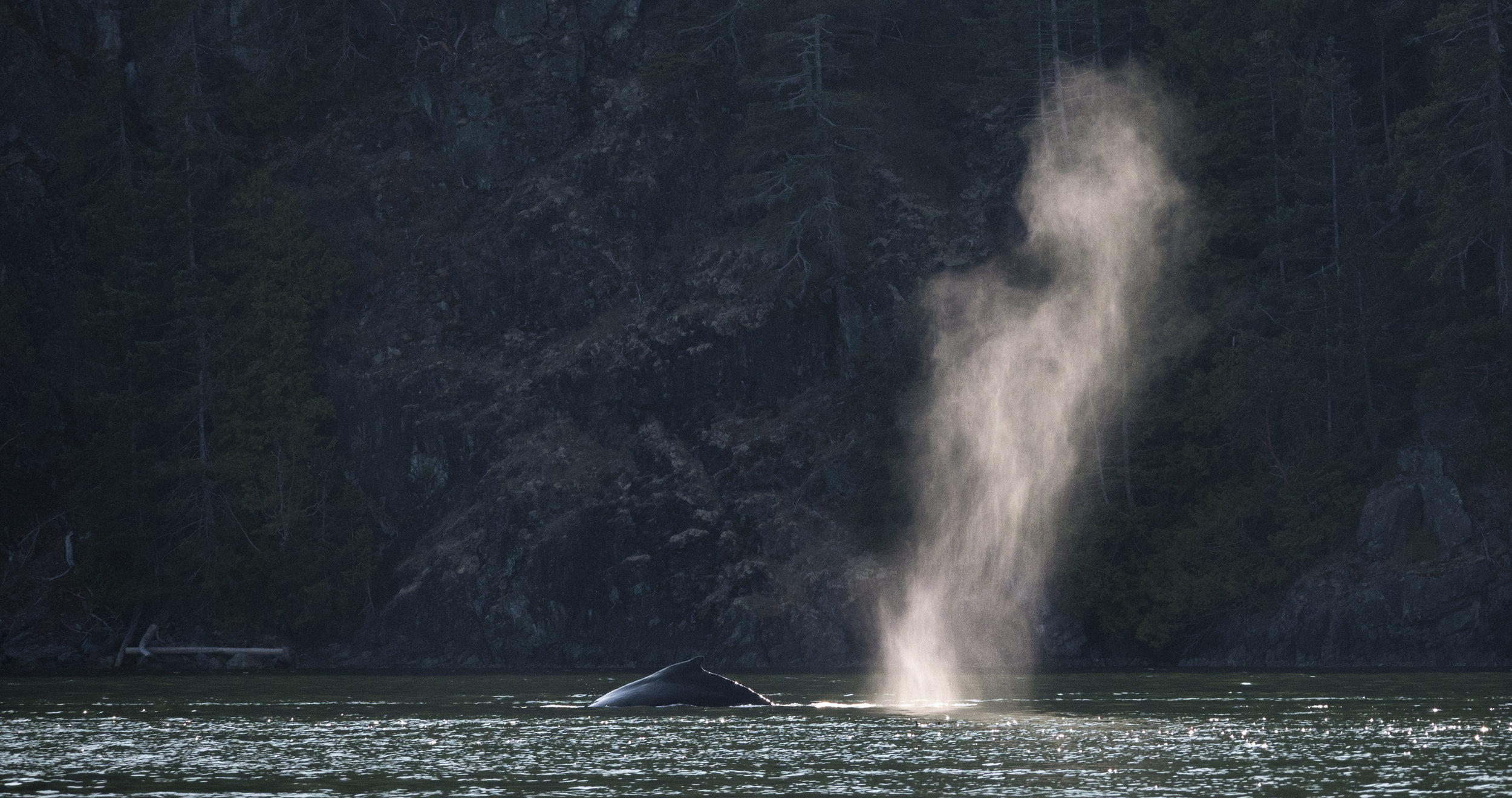 Humpback whale photo tours