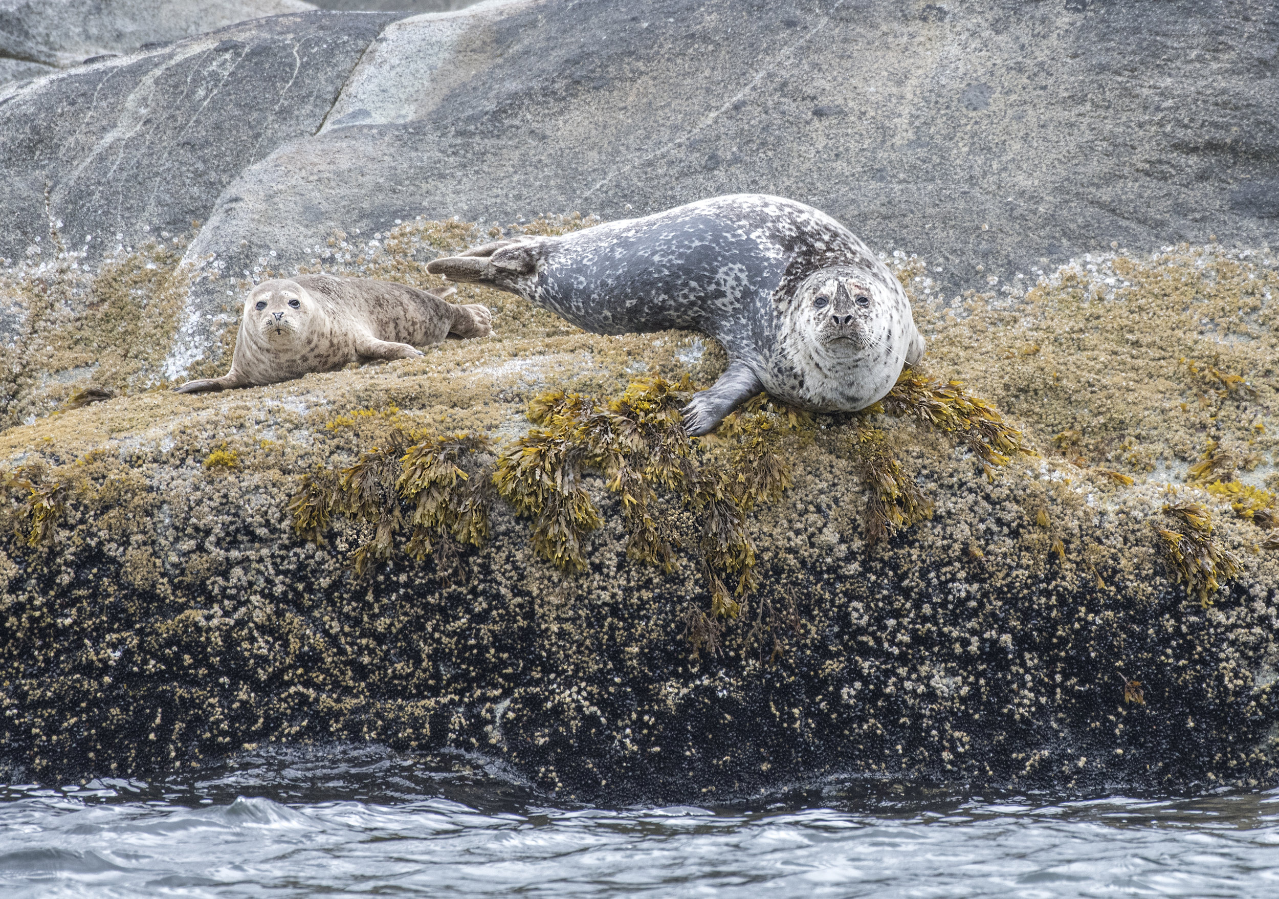 Seal photo tours