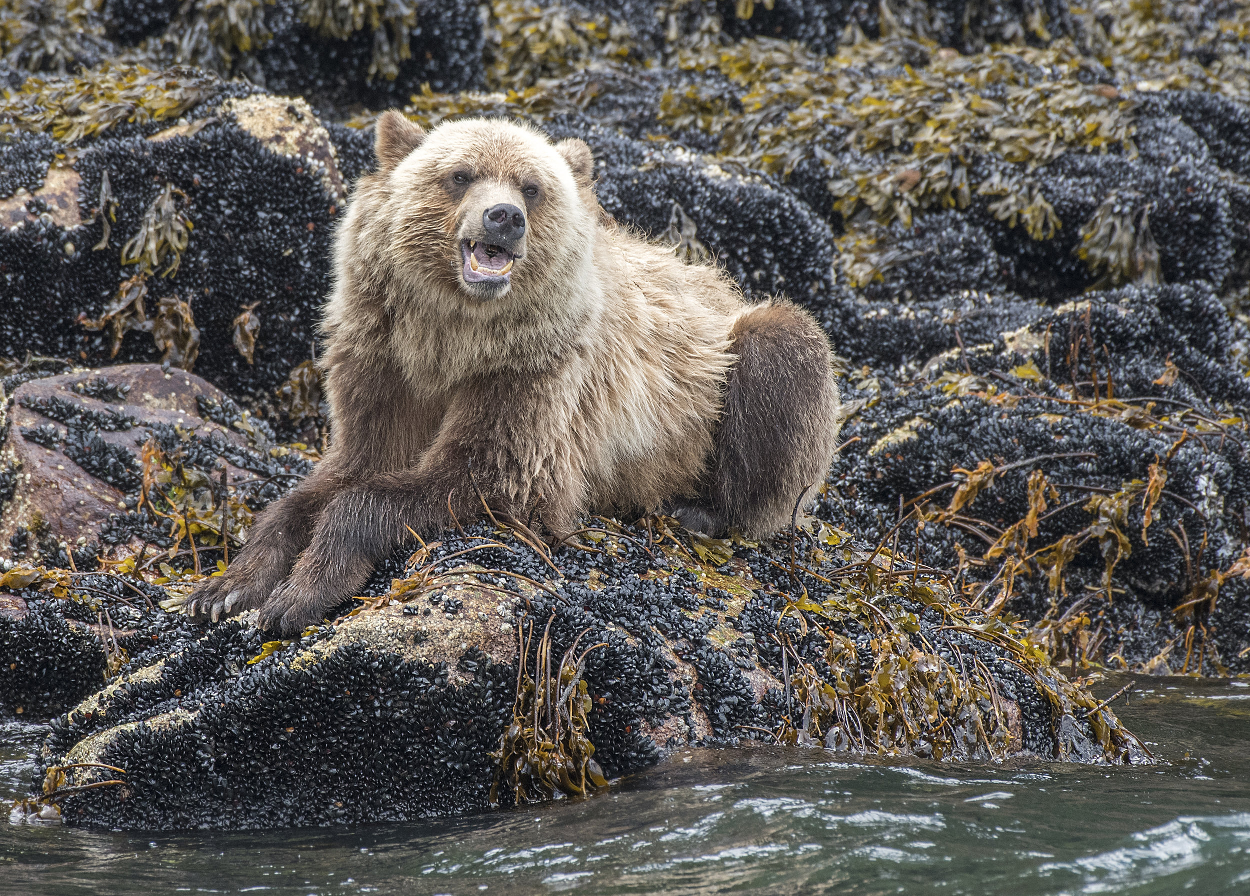 grizzly bear photo tours Canada