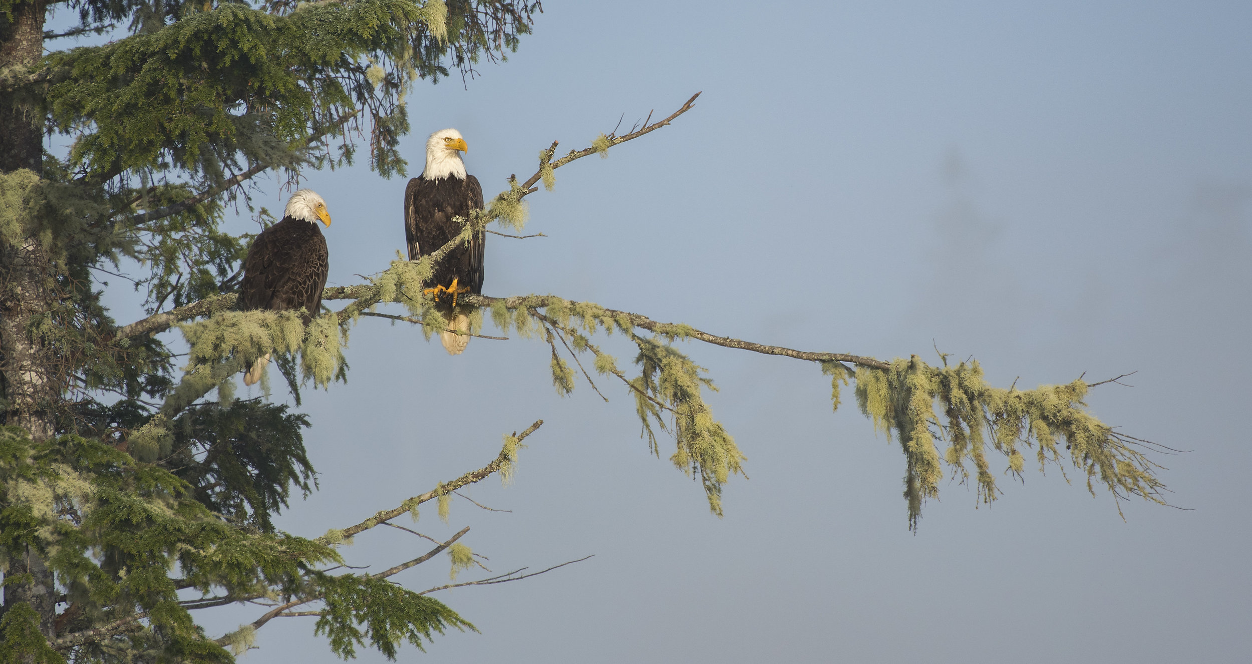 Eagle photography tours Canada