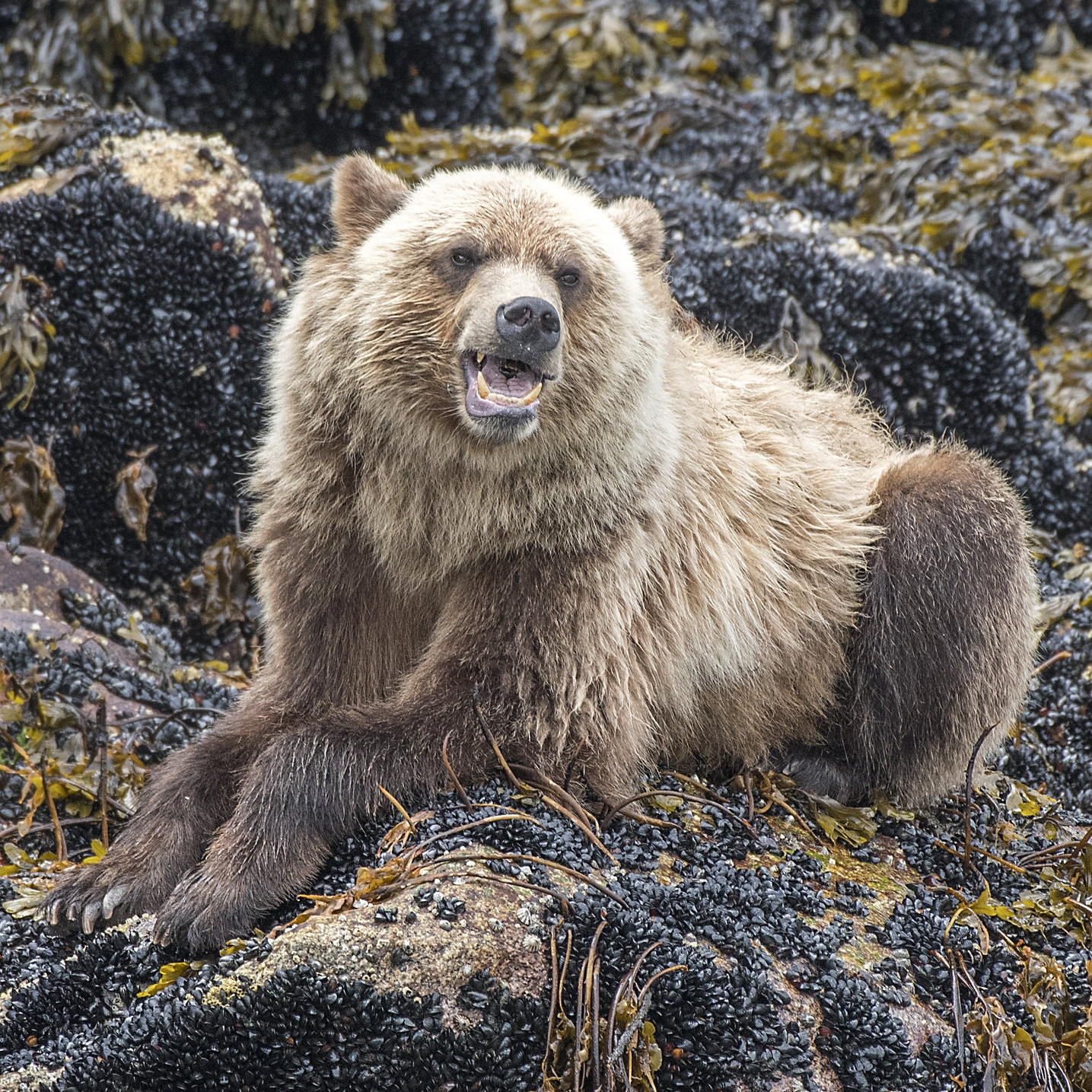 Grizzly bear photography workshops North of 49 photography