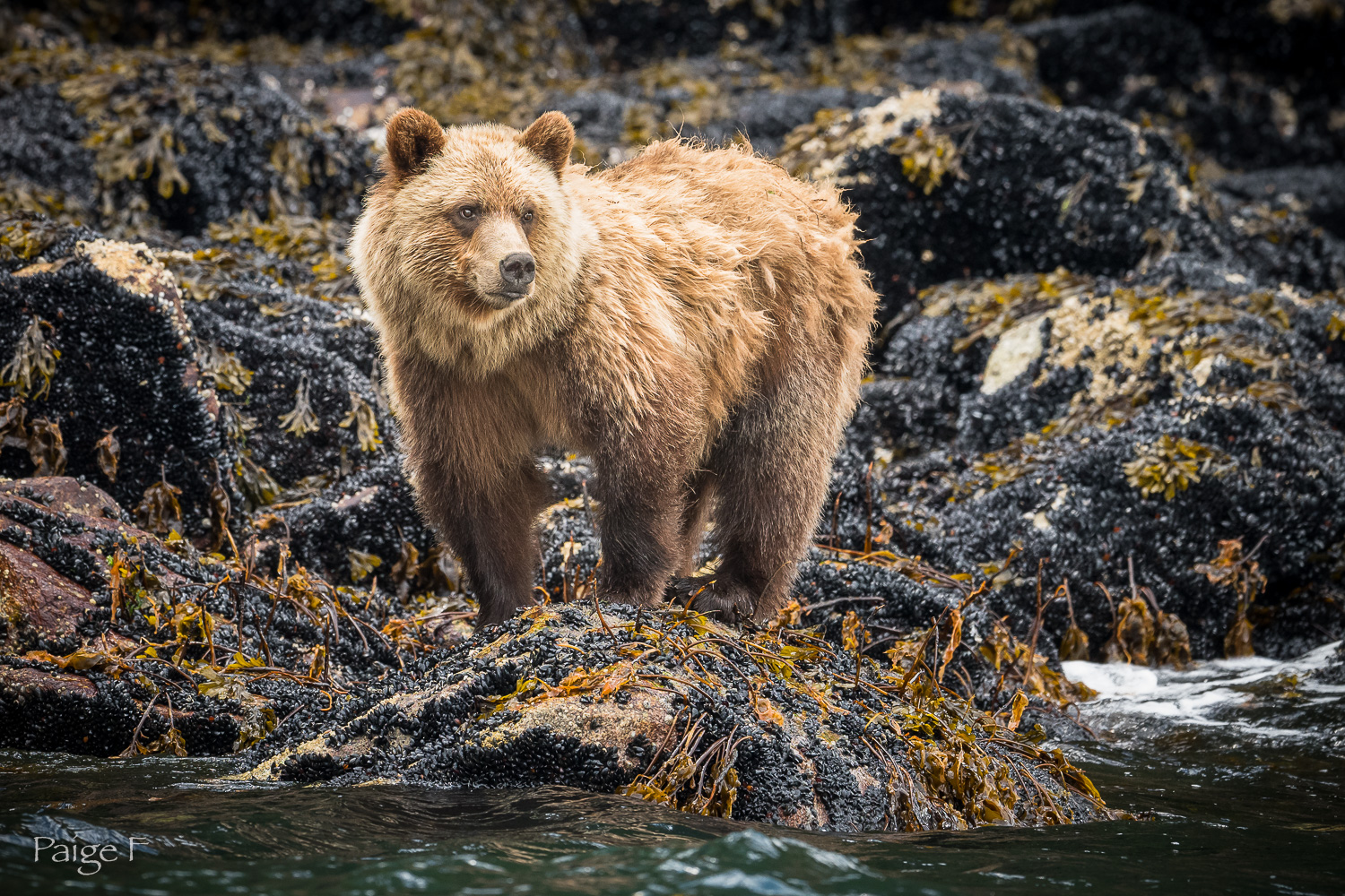 20180719-19-Grizzly-425-2.jpg