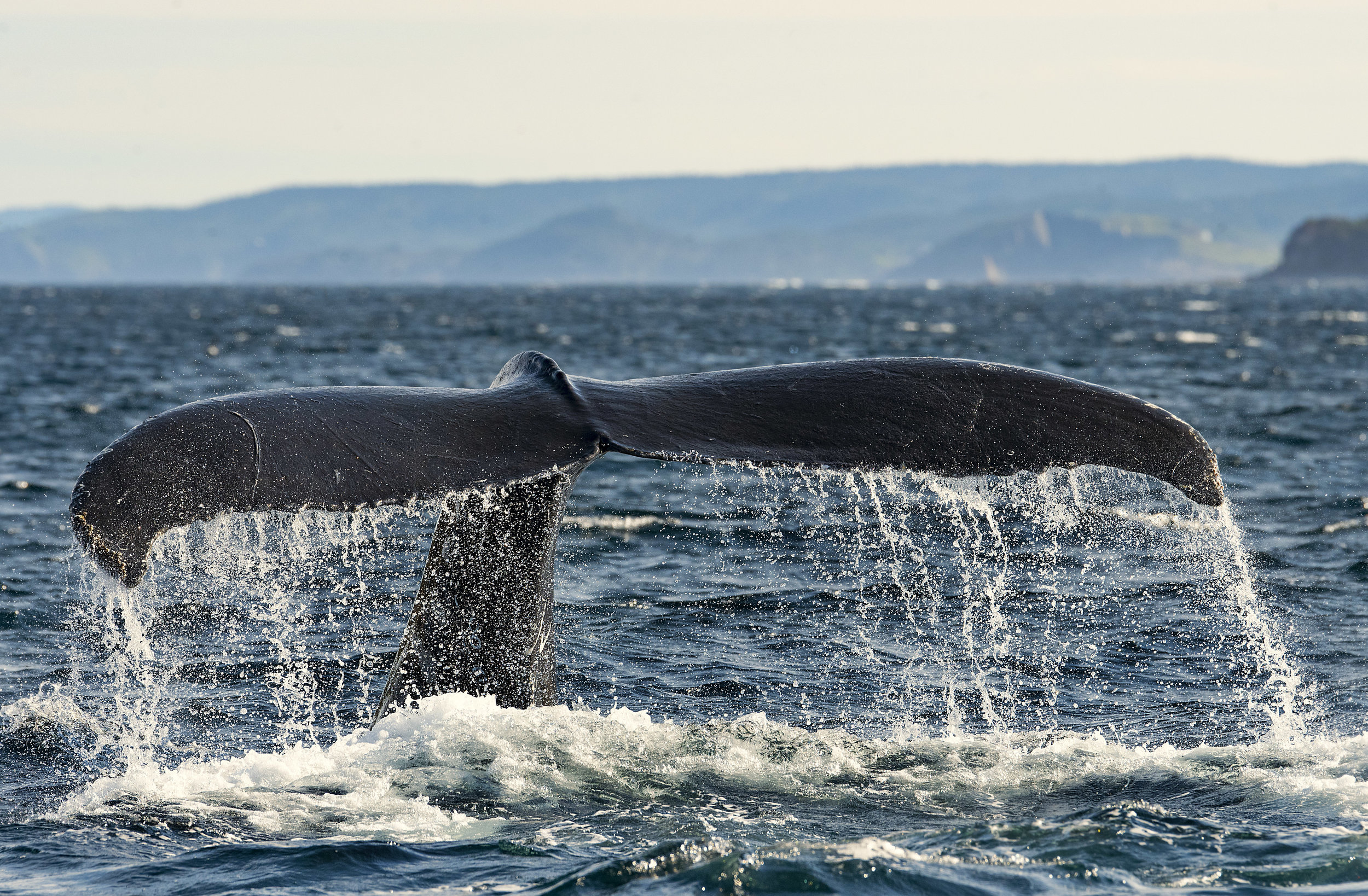 epic whale tail light.jpg