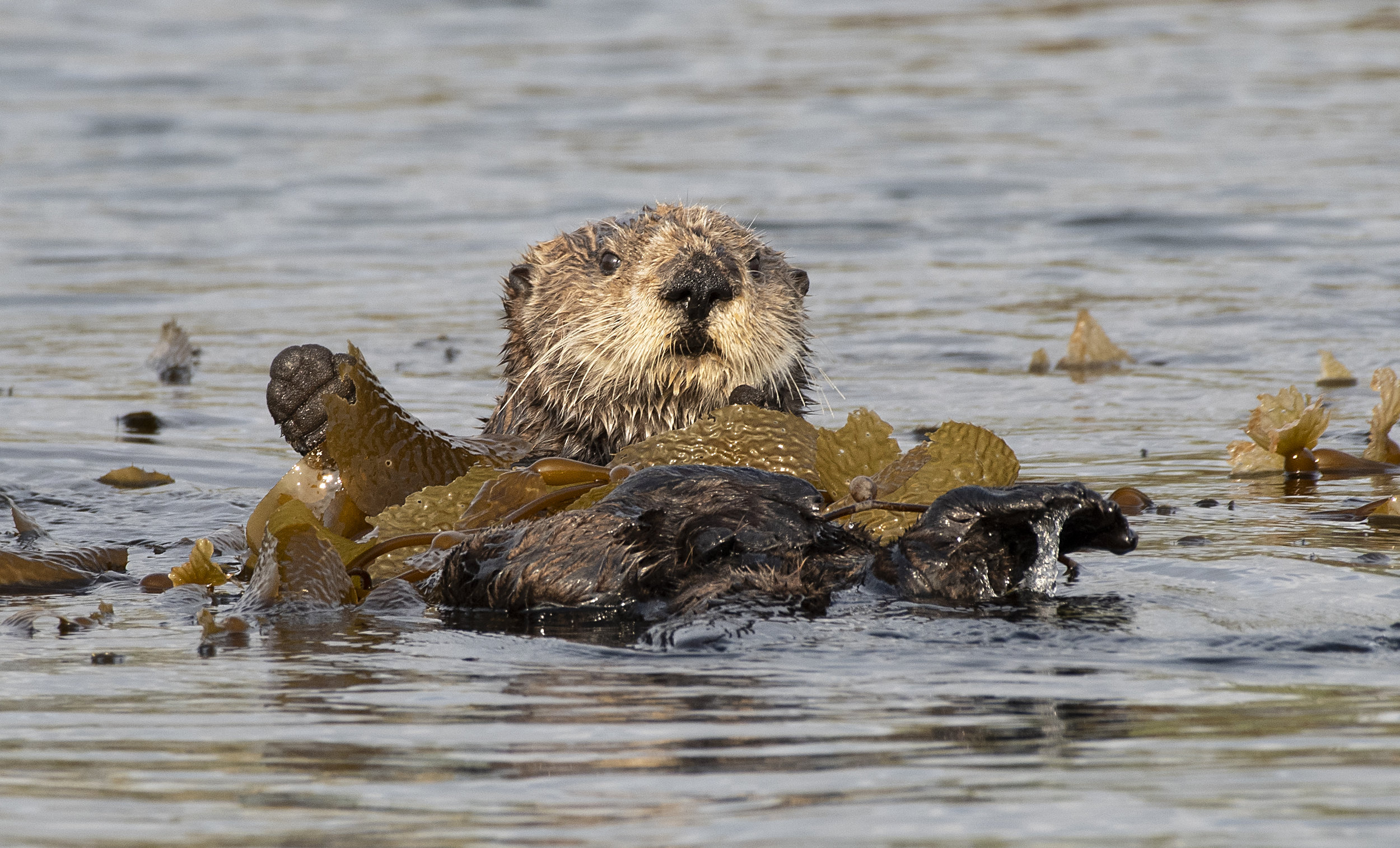 Sea Otter photography workshops
