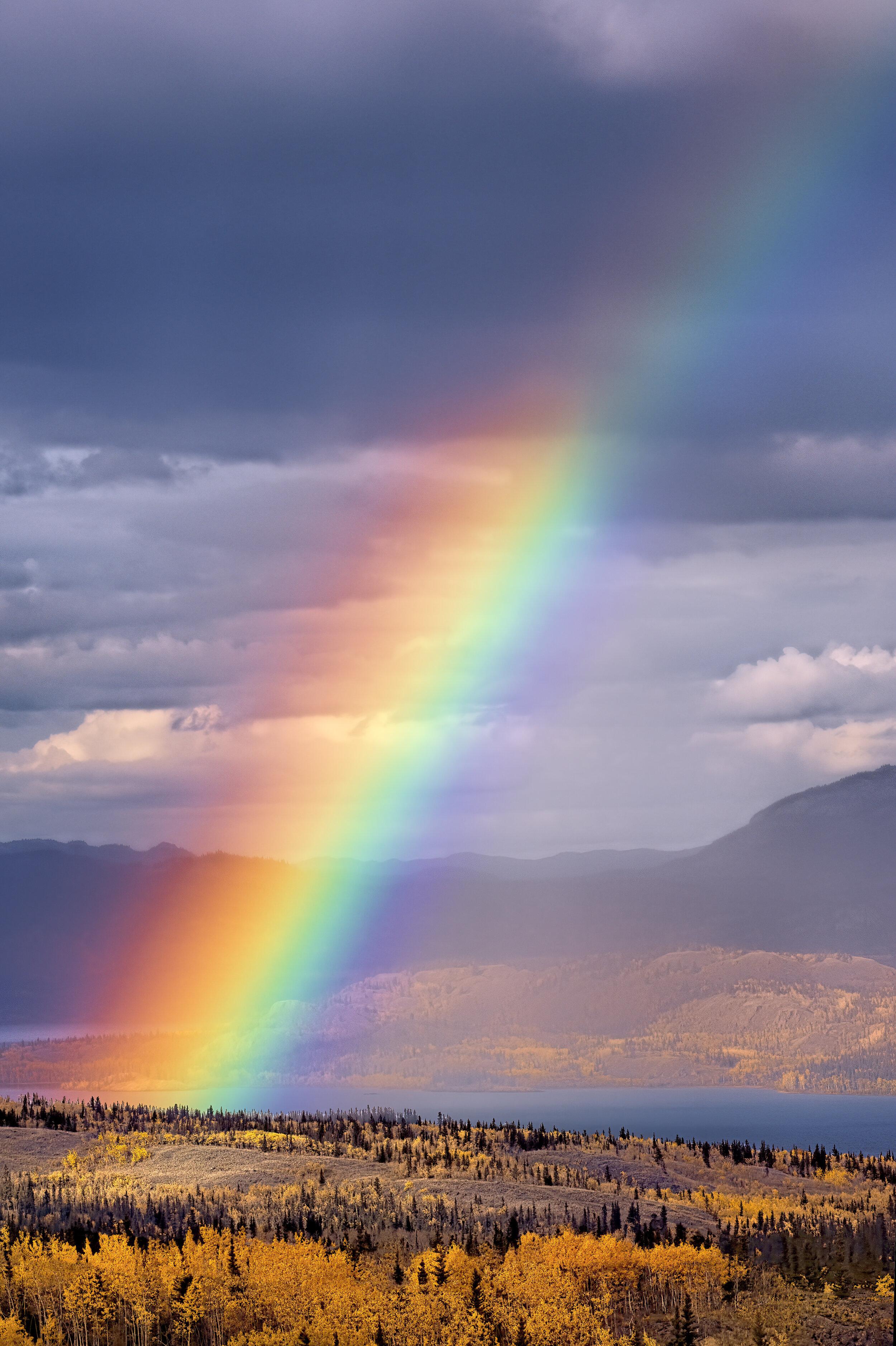 Grizzly bear Subdivision Rainbow Yukon