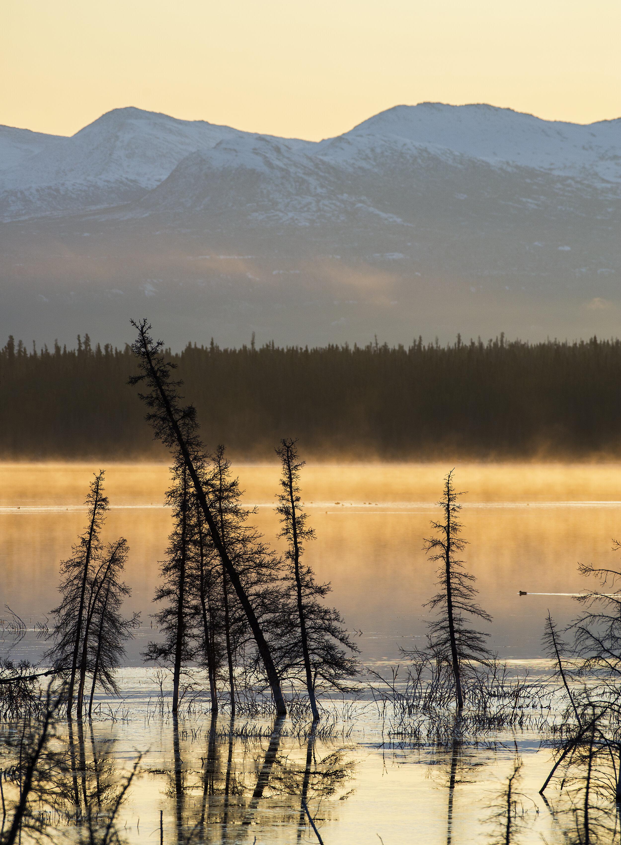 Beautiful foggy Yukon mornings