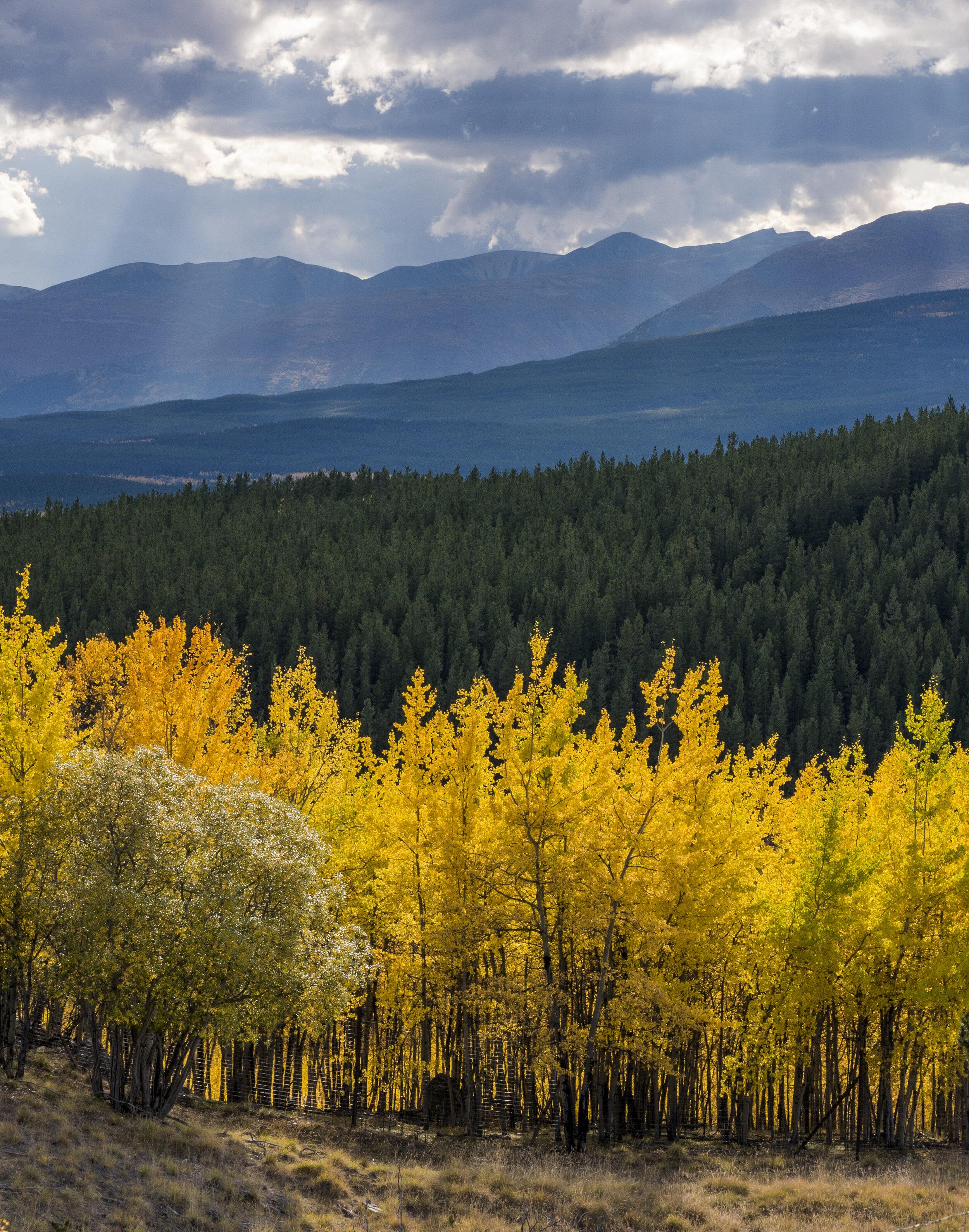 Fall layers in Yukon