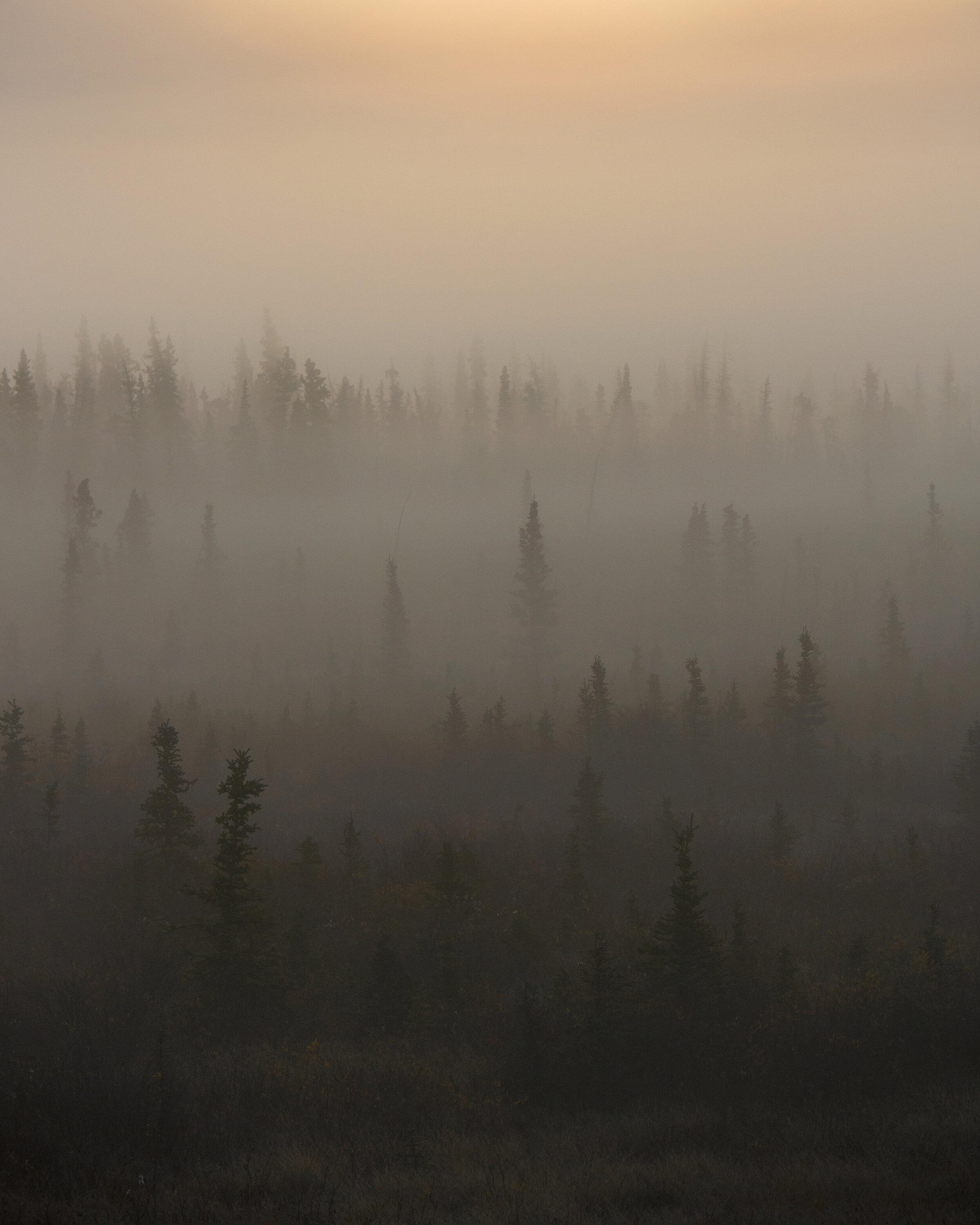 Foggy Alaska highway morning