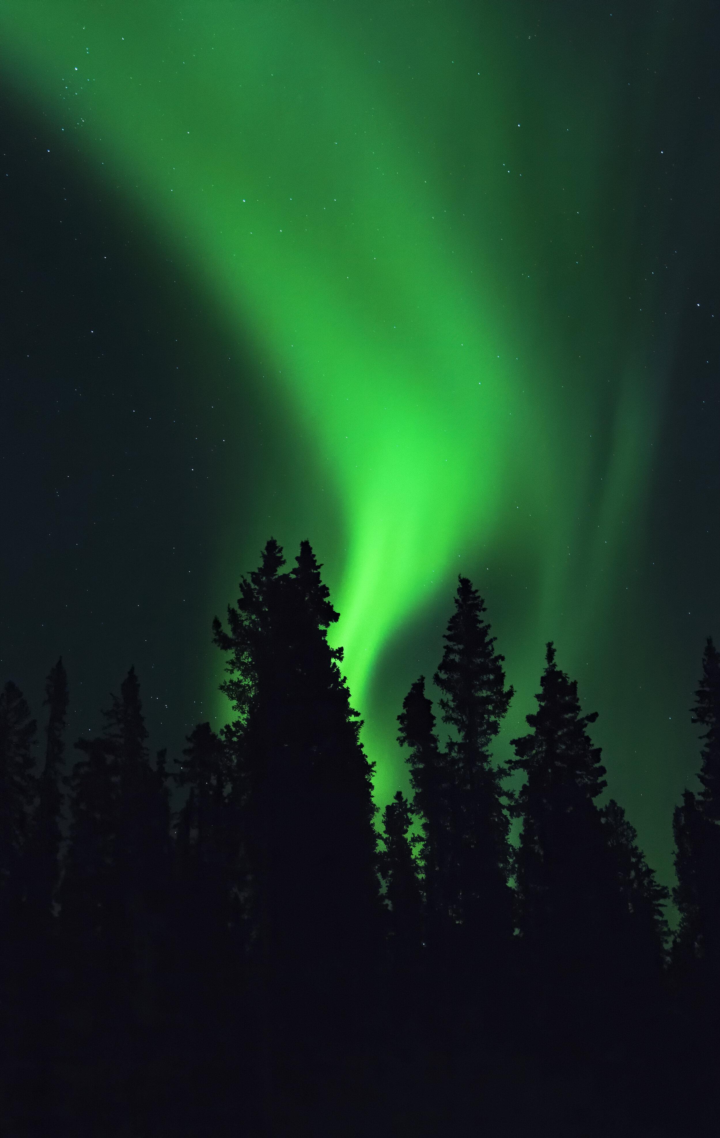 Burning bush aurora Yukon