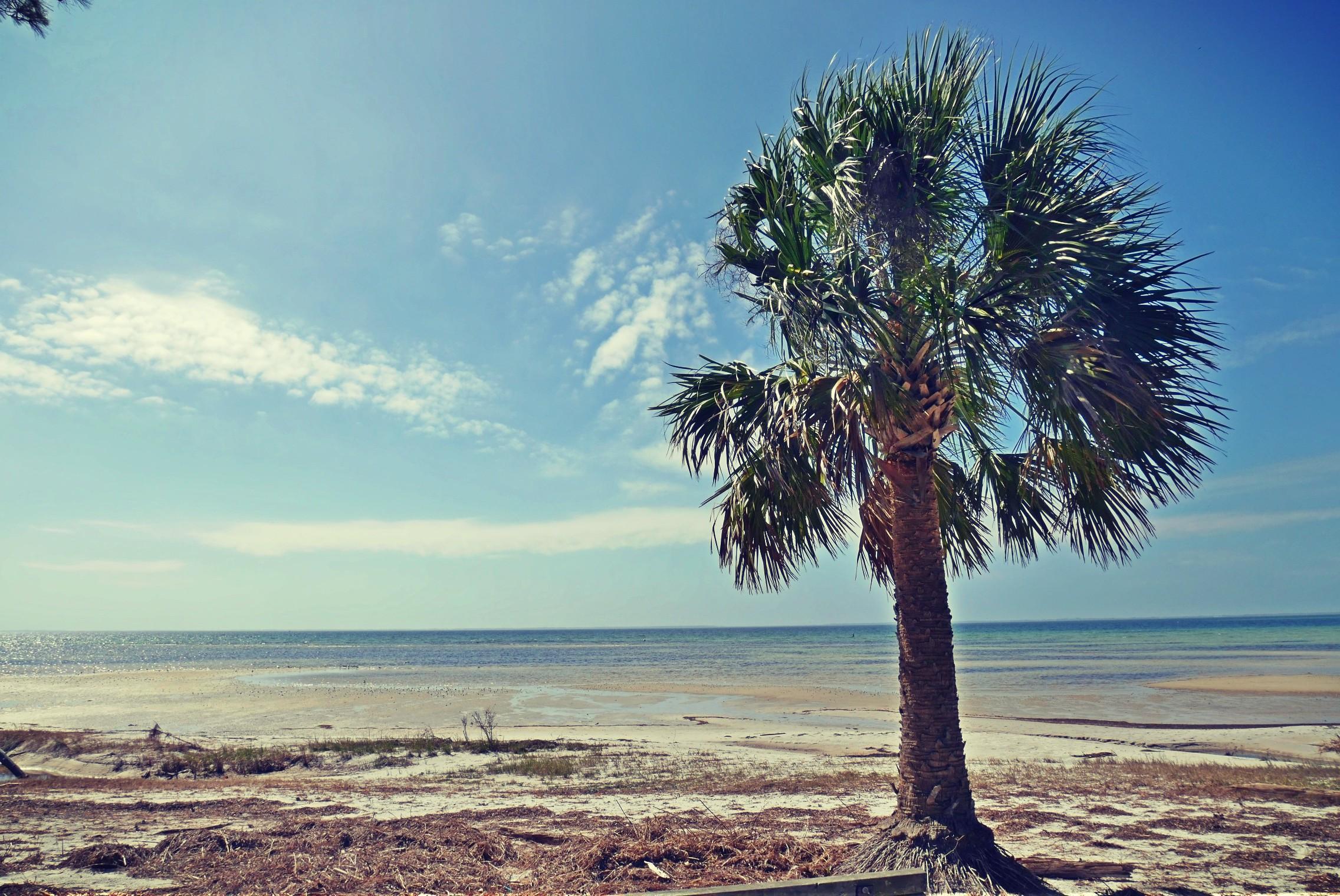 St. Joseph Bay - Port St. Joe, FL
