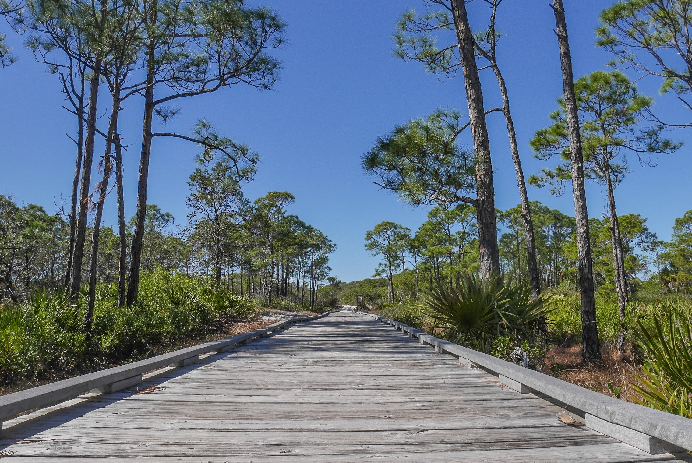 St. Joe Wilderness Preserve - FL