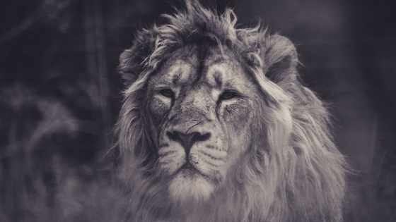 A++++FREE Unsplash.com, Earth Day Lion BuyerAgent.comDC, MD, VA Buy a Home,.jpg