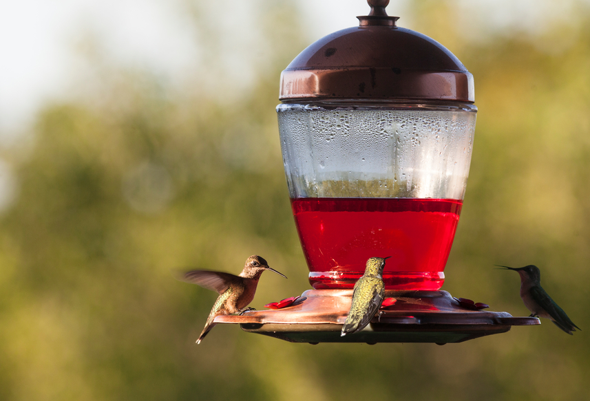 OWN STOCKSEY.com how to make hummingbird food with sugar and water around feeder.jpg