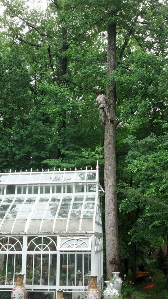 yockley tree service.jpg