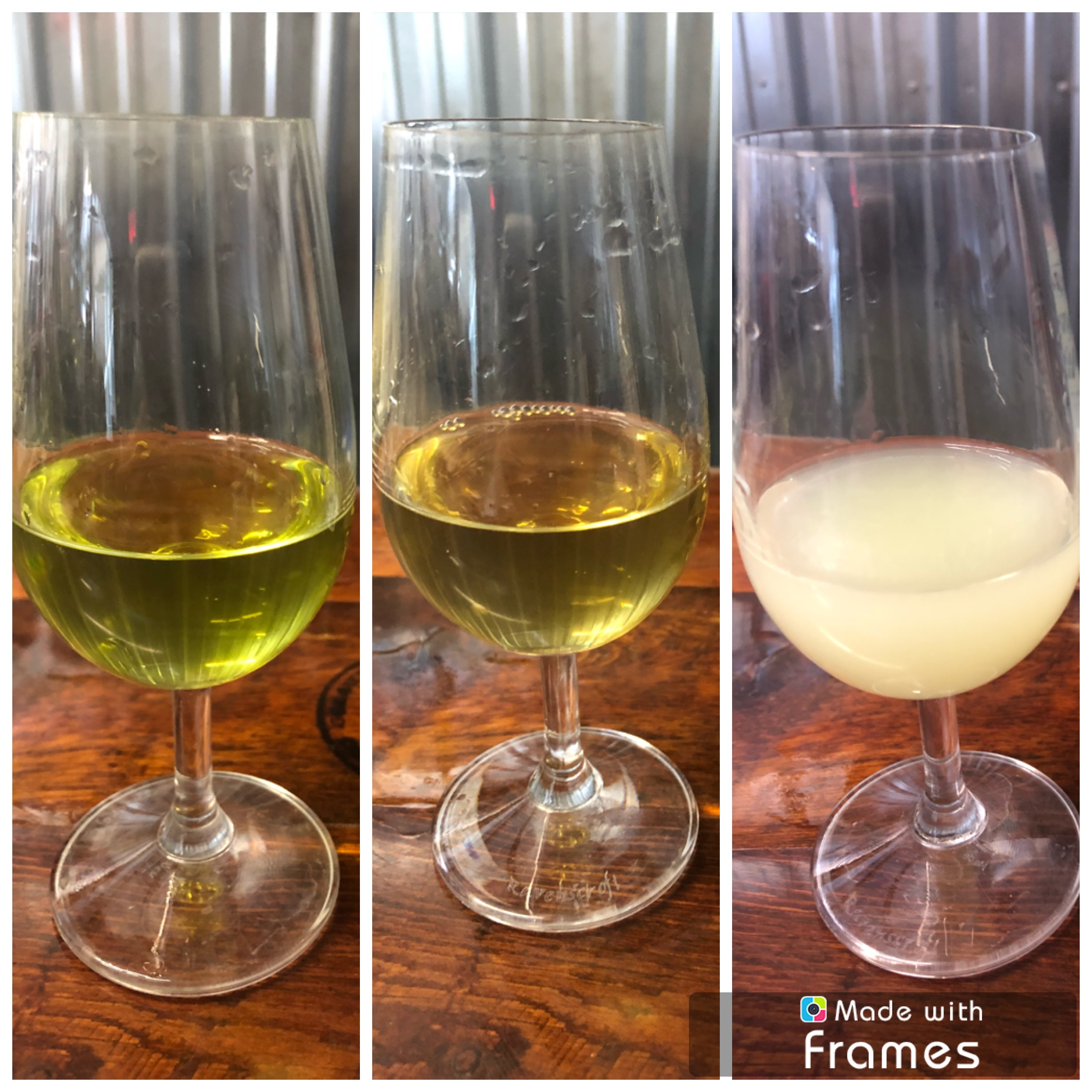 """The glass on the far left displays the natural color of Trail of the Cedars Absinthe, the glass in the middle shows the color of the spirit after resting in a green tinted glass bottle, and the glass on the far right shows the milky color of Trail of the Cedars Absinthe after """"La Louche."""""""