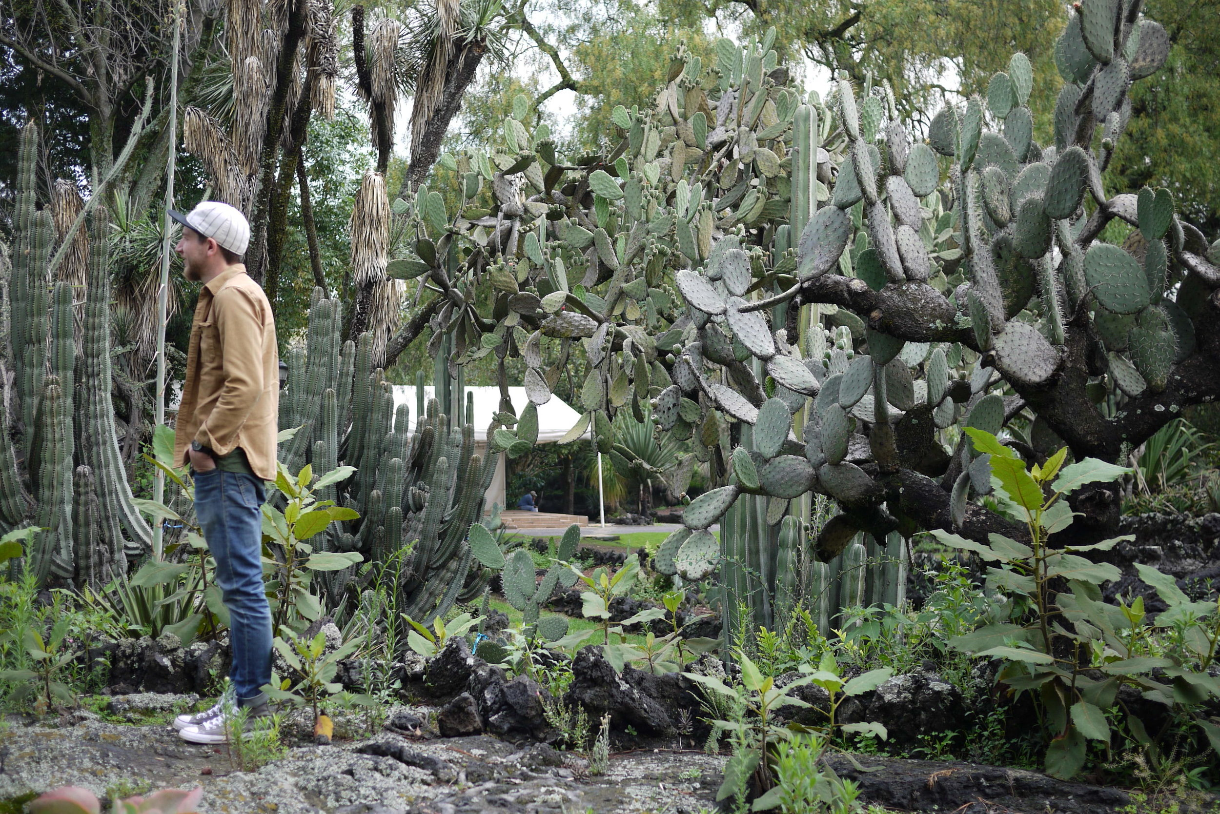 Tyler among the Cacti, for scale.