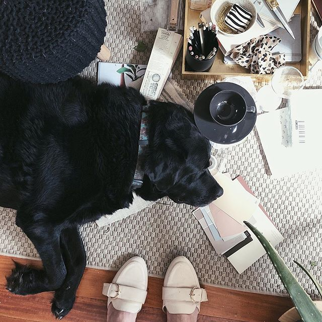 Thursday work mood 😴  Ignoring for a second the adorable pooch sleeping among my stuff, did you know a cluttered workspace is a sign of genius? I can't remember who said that (Einstein? Edison? Dolly Parton?) but I read it somewhere so it must be true, right? 😉🙃 . #creativelife #femaleentrepreneur #hersuccess #whereiwork #desksituation #savvybusinessowner #workhardanywhere #styledshoot #flatlays #flatlayoftheday #styling #hercreativestudio #styledbyme #communityovercompetition #workspacegoals #creativeheart #creativityfound #creativemamas #theeverygirlathome #styledstockphotography #cupsinframe  #creativepreneur #sharedworkspace #ladybosslife #smallbusinesslife #workfromhomemama