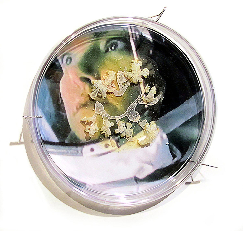 "I Caught it at The Movies - Andromeda Strain Petri dish, digital image, agar, Halobacterium sp. NRC-1. 6""x 6"" 2013"