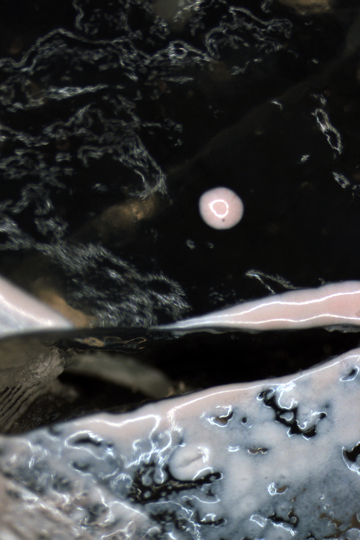 "Other World 1   Microscopy digital image mounted on photoboard 16"" x 24"" 2013"