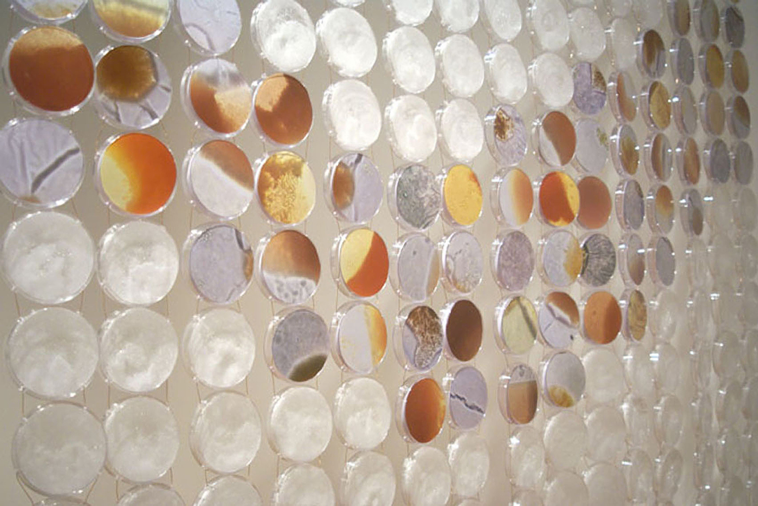 Biotectonics (detail)   Petri dishes (over 1500), grown salt crystals, microscopy digital images on paper of  Halobacterium sp. NRC- 1  21' x 7.5'  2010