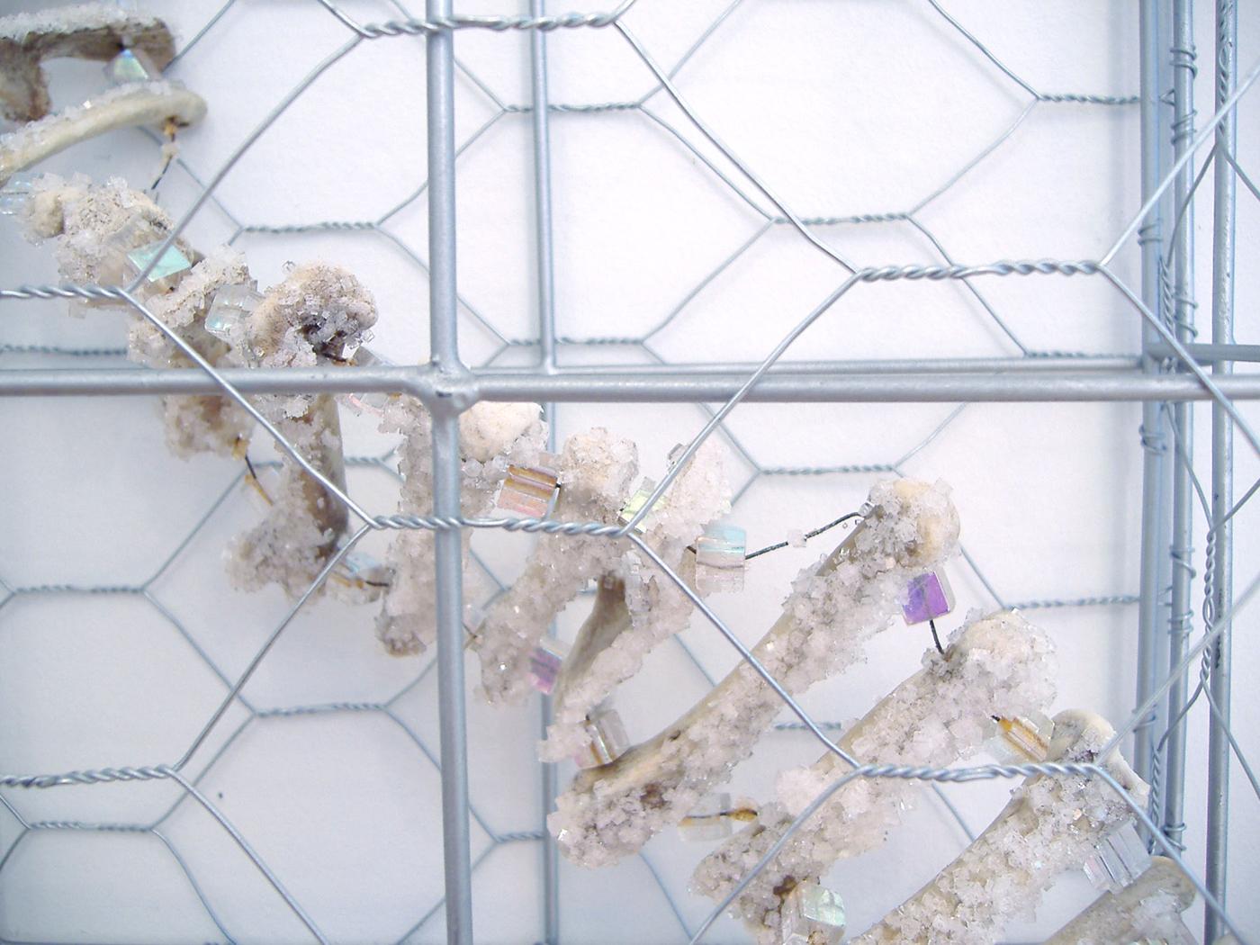 """Zoonosis  (detail) Chicken wire, chicken bones, beads, and grown salt crystals 68"""" x 10"""" x 5"""" 2006"""