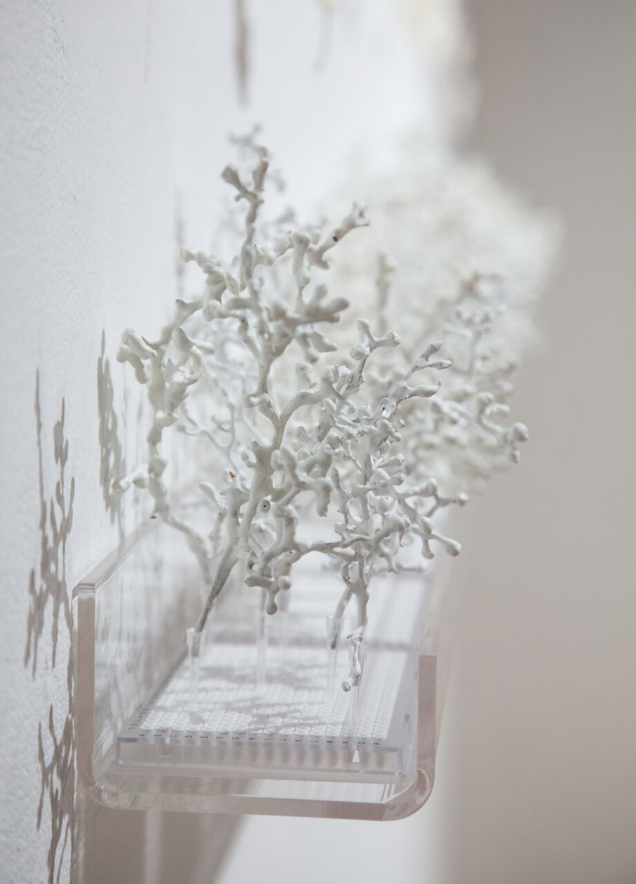 Contained - Fragile Forest (detail 3).jpg