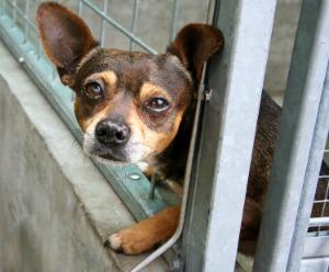 6.image.shelter dog.jpg