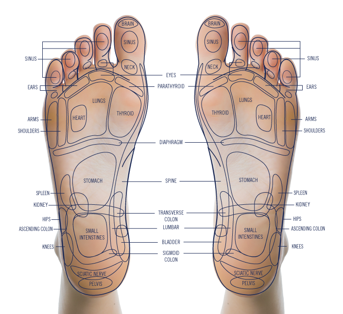 "- The base of the FootVibe Pro is studded with acupressure nodules that push on targeted pressure points, especially on the feet.• Part of Reflexology, acupressure is an ancient technique based on the fact that all of the nerves throughout the body are interconnected, and this system of nerves all end at the base of the feet.• By massaging and applying pressure to areas of the feet, you can ""touch"" every part of the body. Reflexology seeks to unblock of flow of energy throughout the body and to boost the functions of the immune system."
