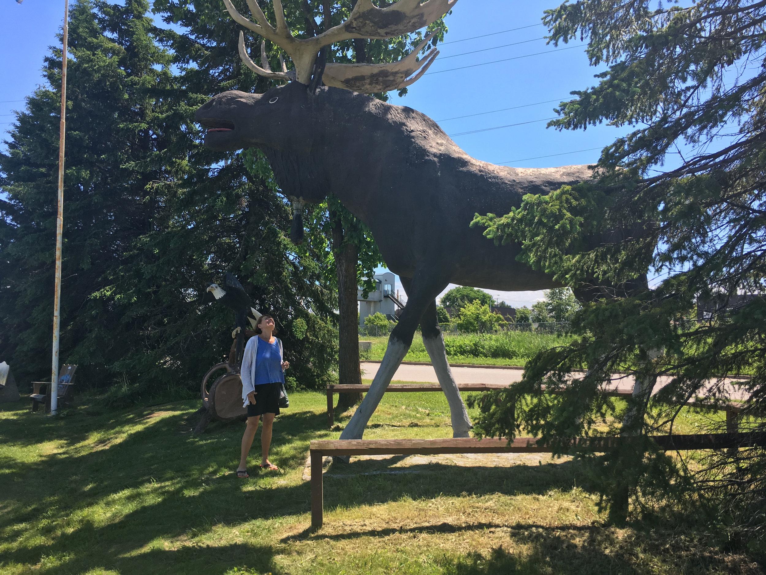 Roadside Moose!