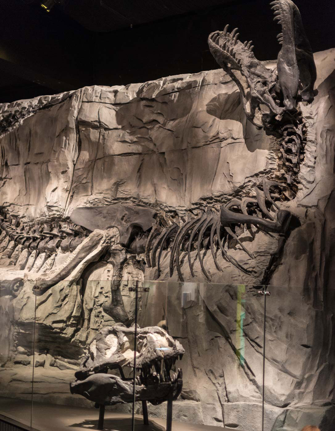 Black Beauty, largest, most intact T-rex in the world